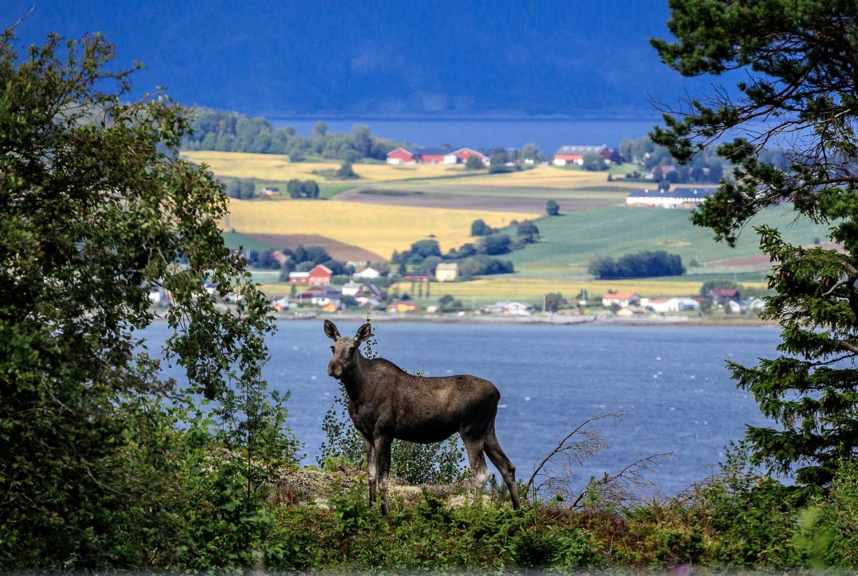 Visitor by Jostein Eidem