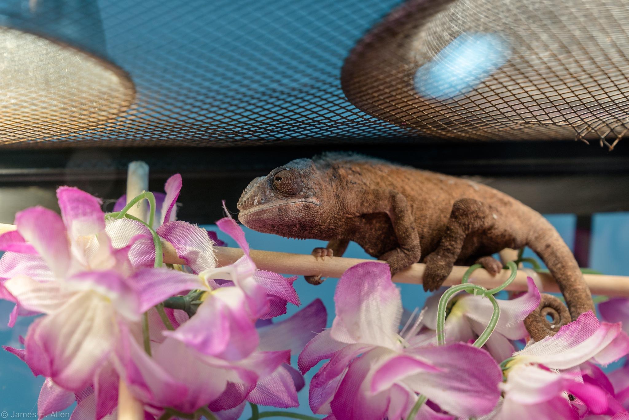 Lizard by jhallen59