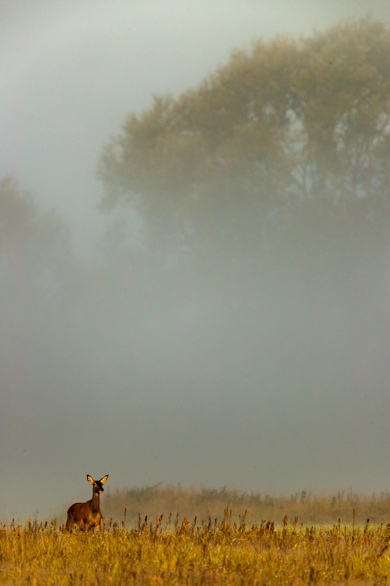 Autumn morning by Håkan Liljenberg