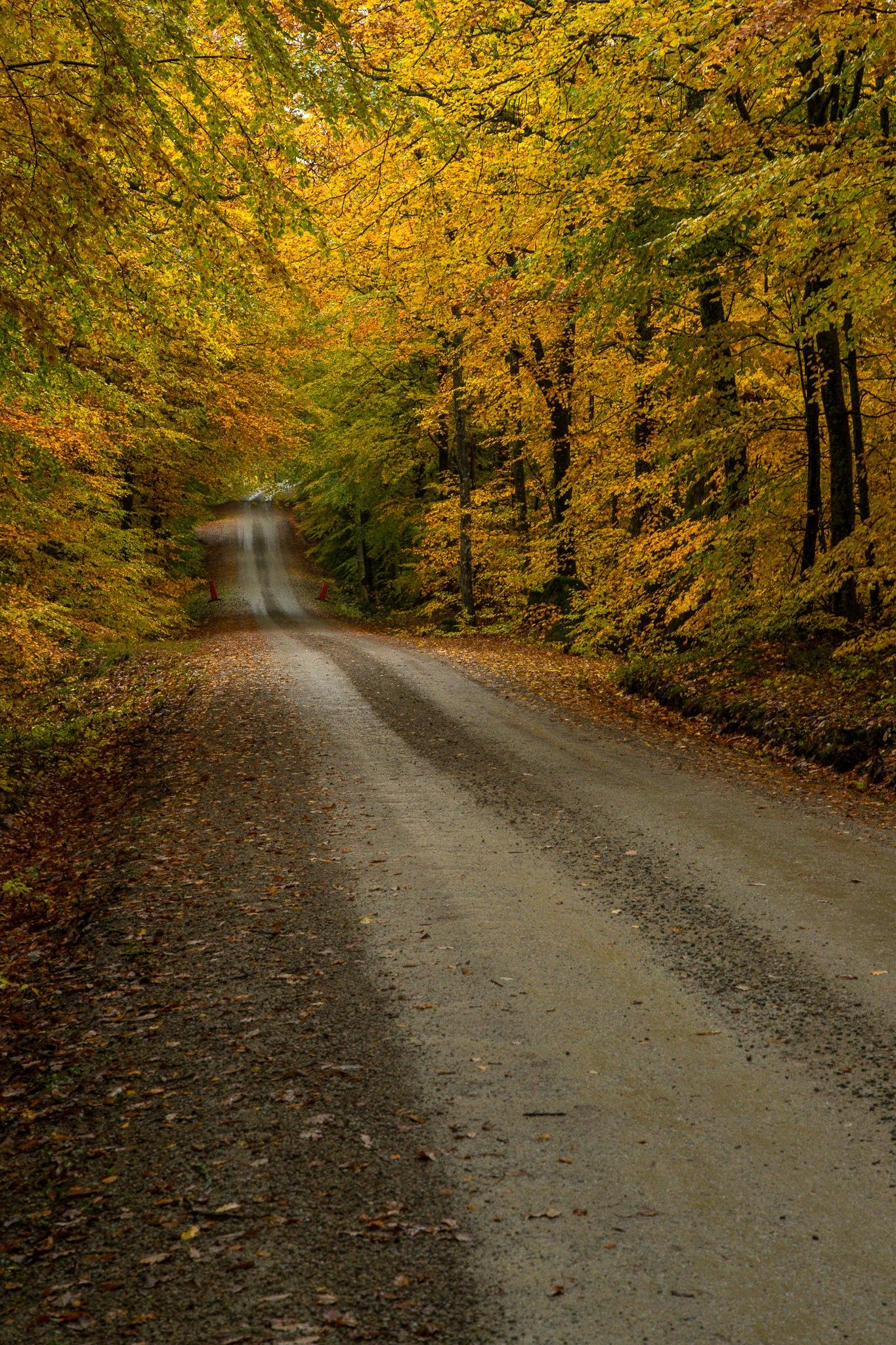 Yellow dirt road by Håkan Liljenberg