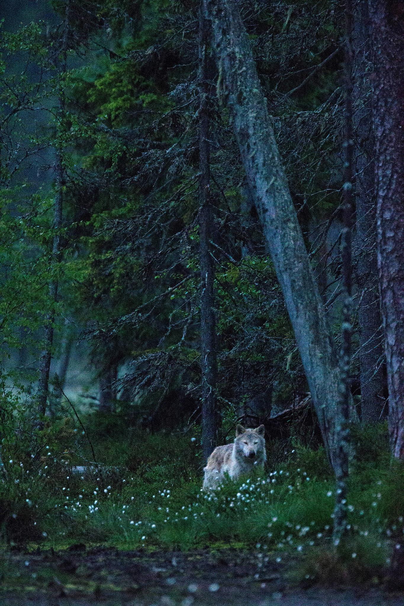 Nordic night by Håkan Liljenberg