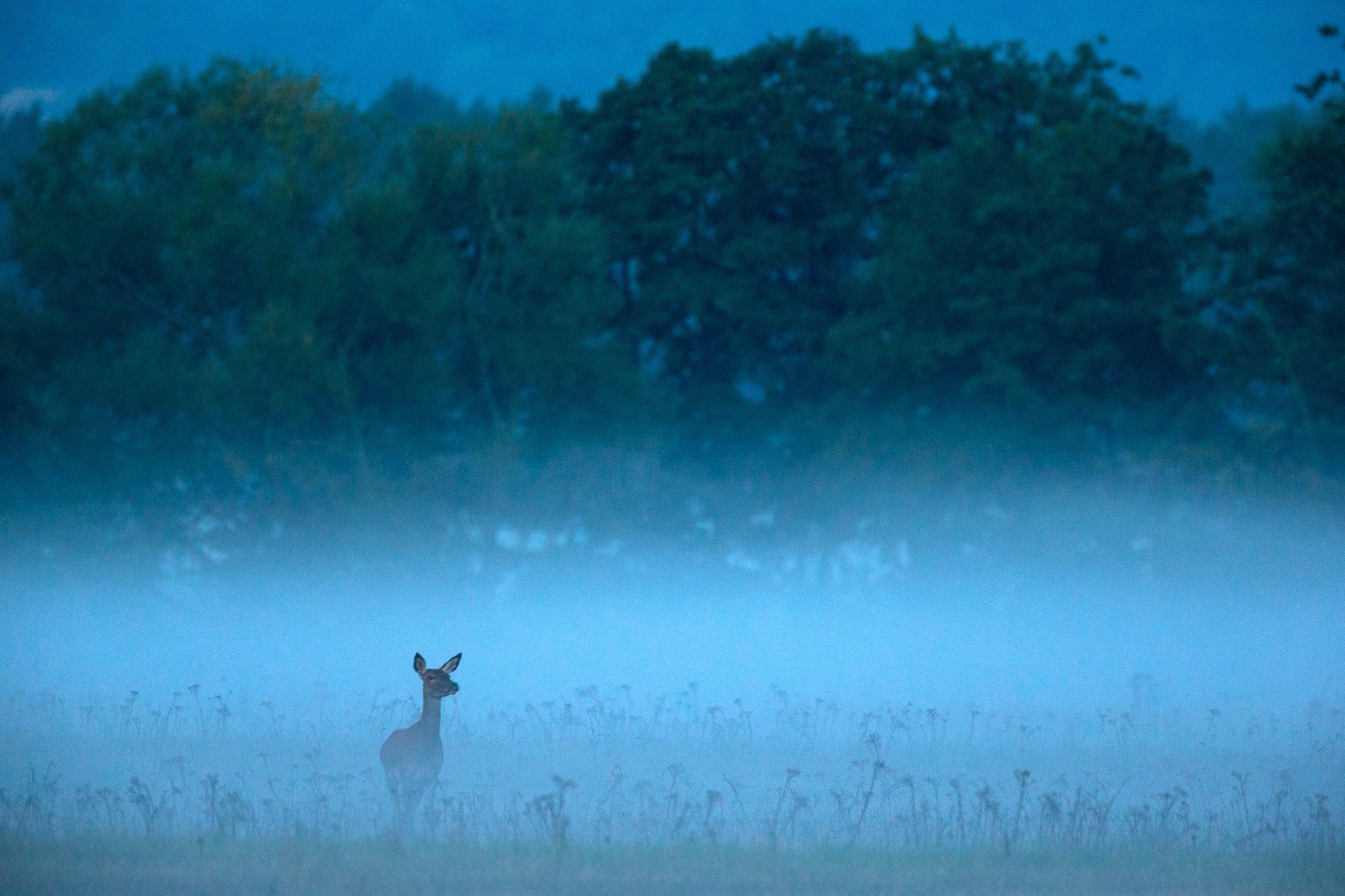 Morning mist by Håkan Liljenberg