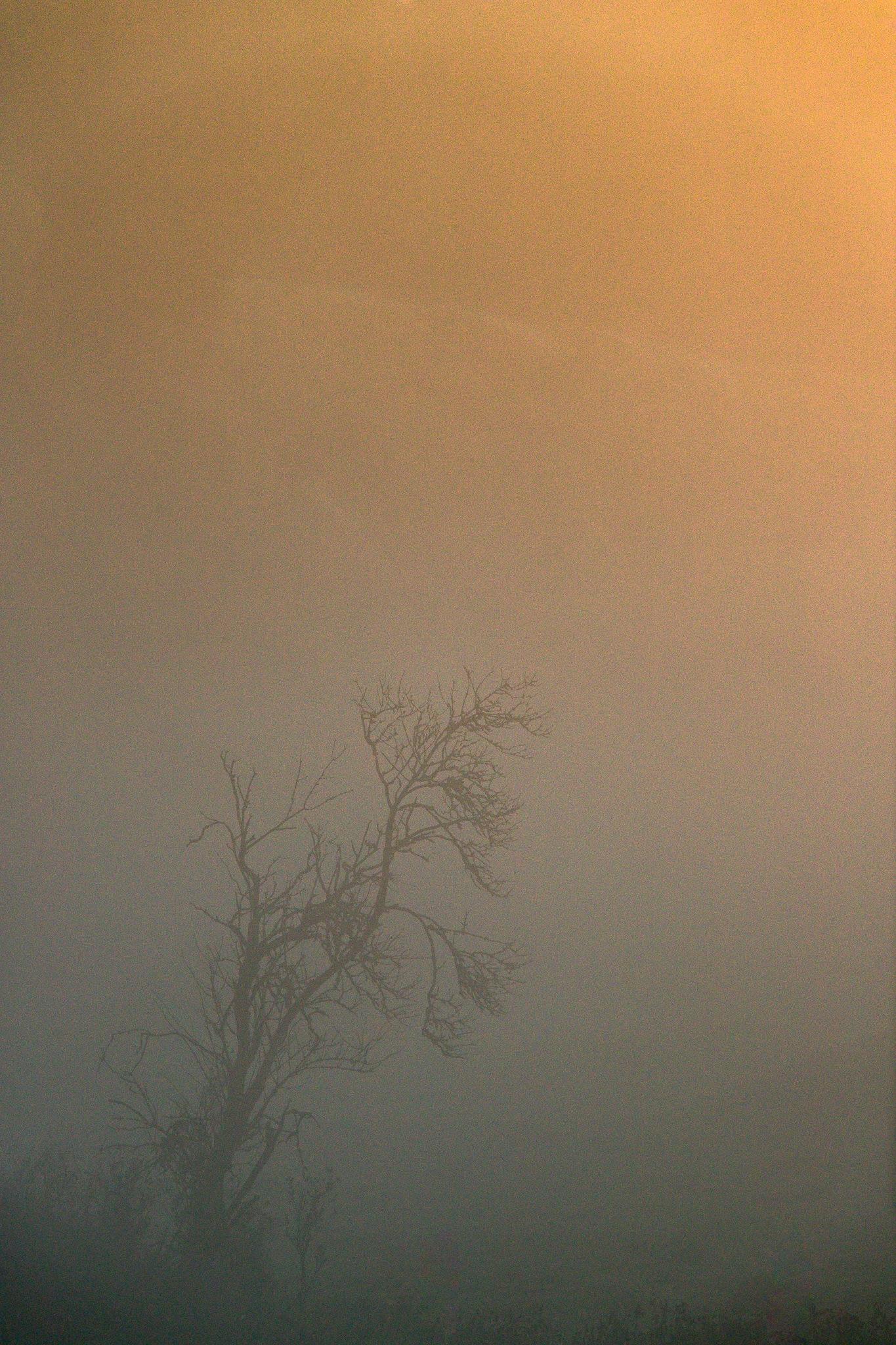 Tree in mist by Håkan Liljenberg