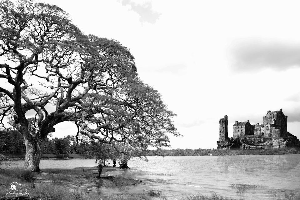 Photo in Black and White #water #lake #sri lanka #nikaweratiya #castle #b&w #black and white #wildlife #animals #habitat