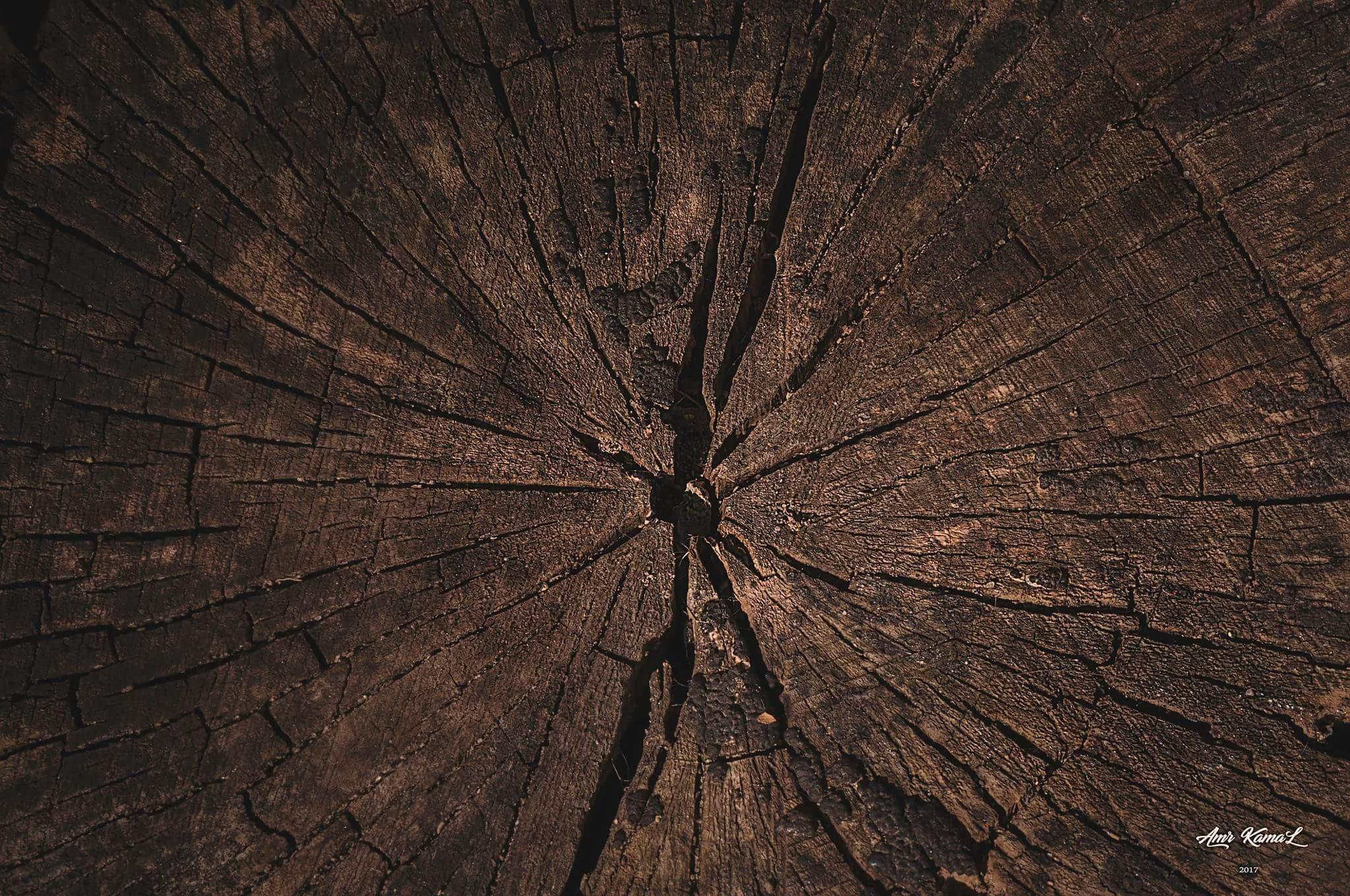 Texture  by Amr Kamal Alden