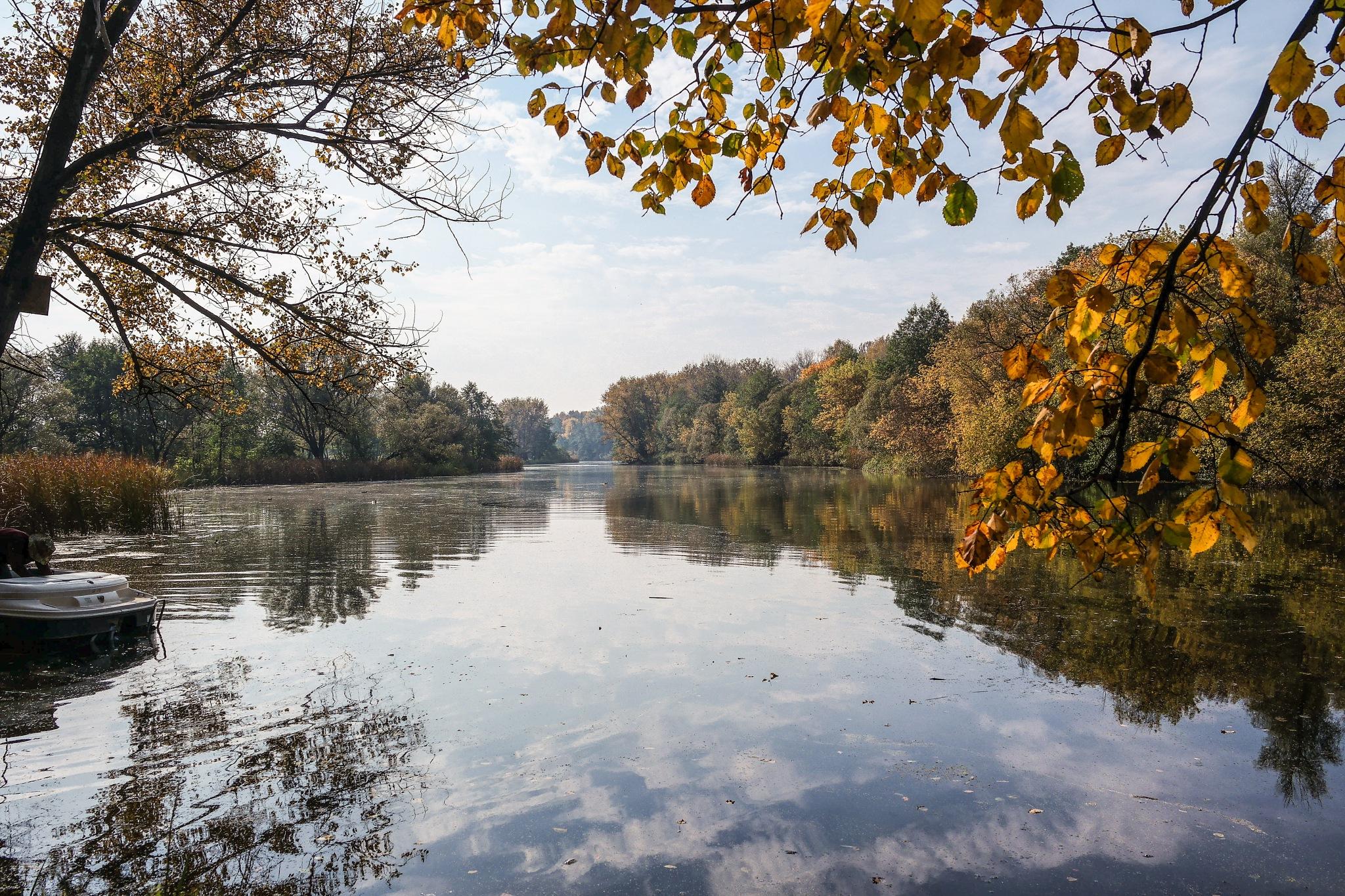 Golden autumn. by Alexandr  Seleznev