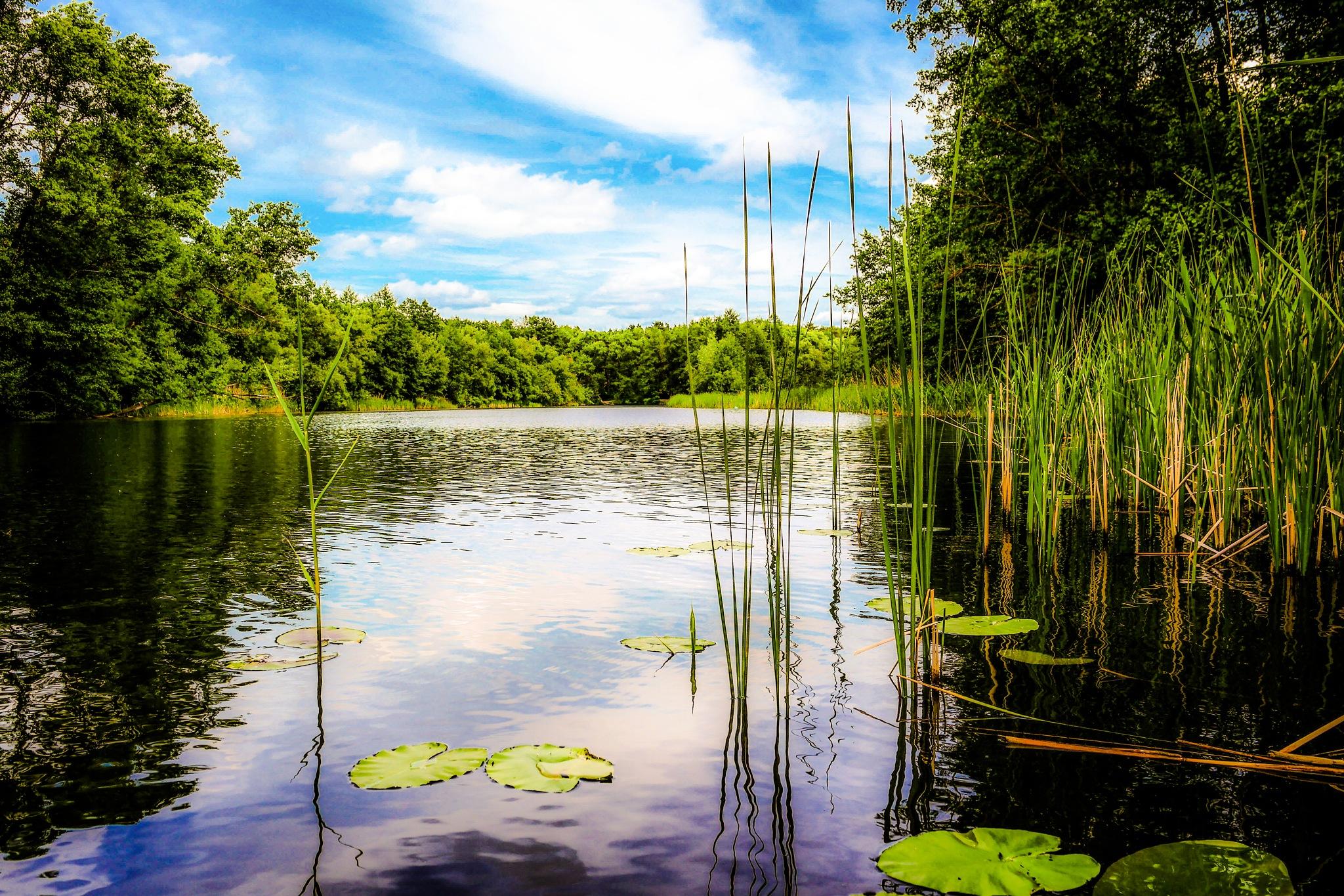 On the river Tsna............ by Alexandr  Seleznev