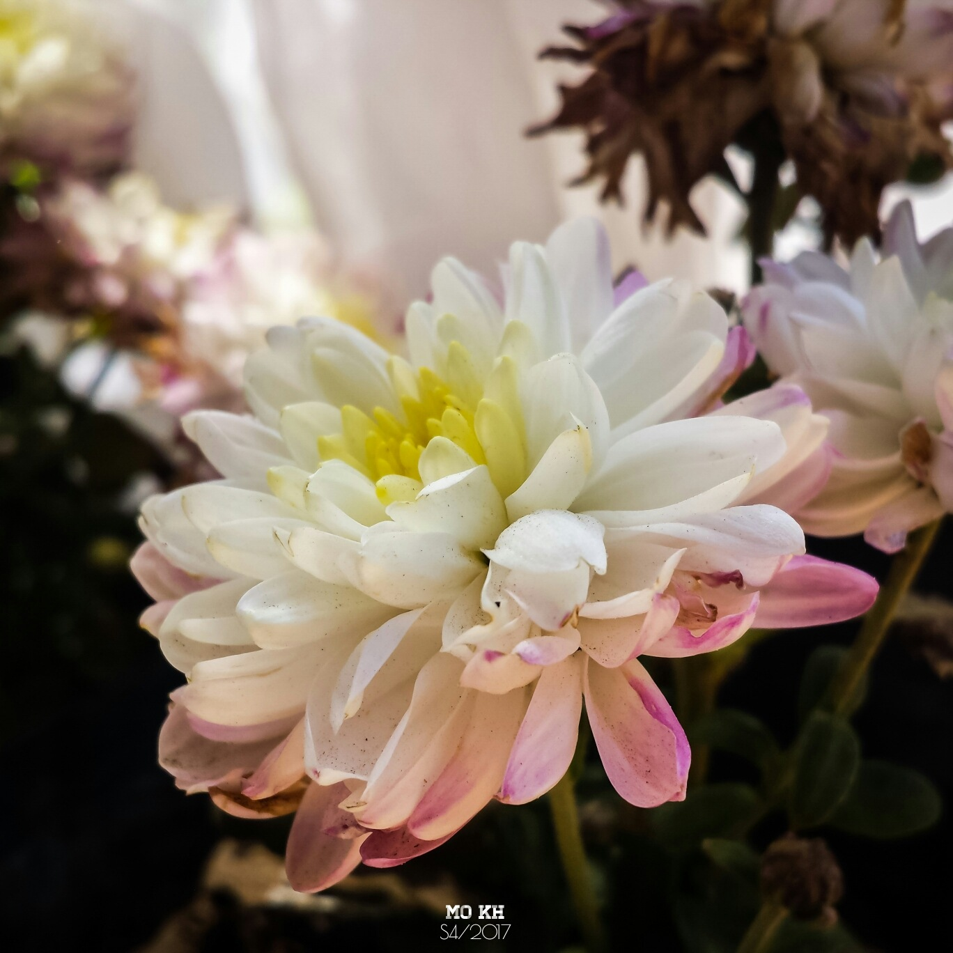 A flower by MO KH