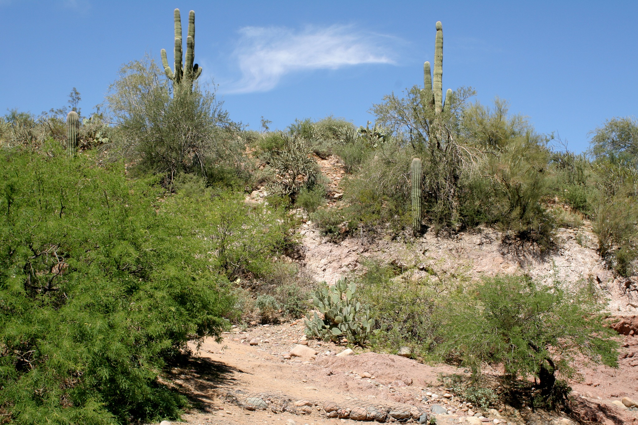 Desert by jimw