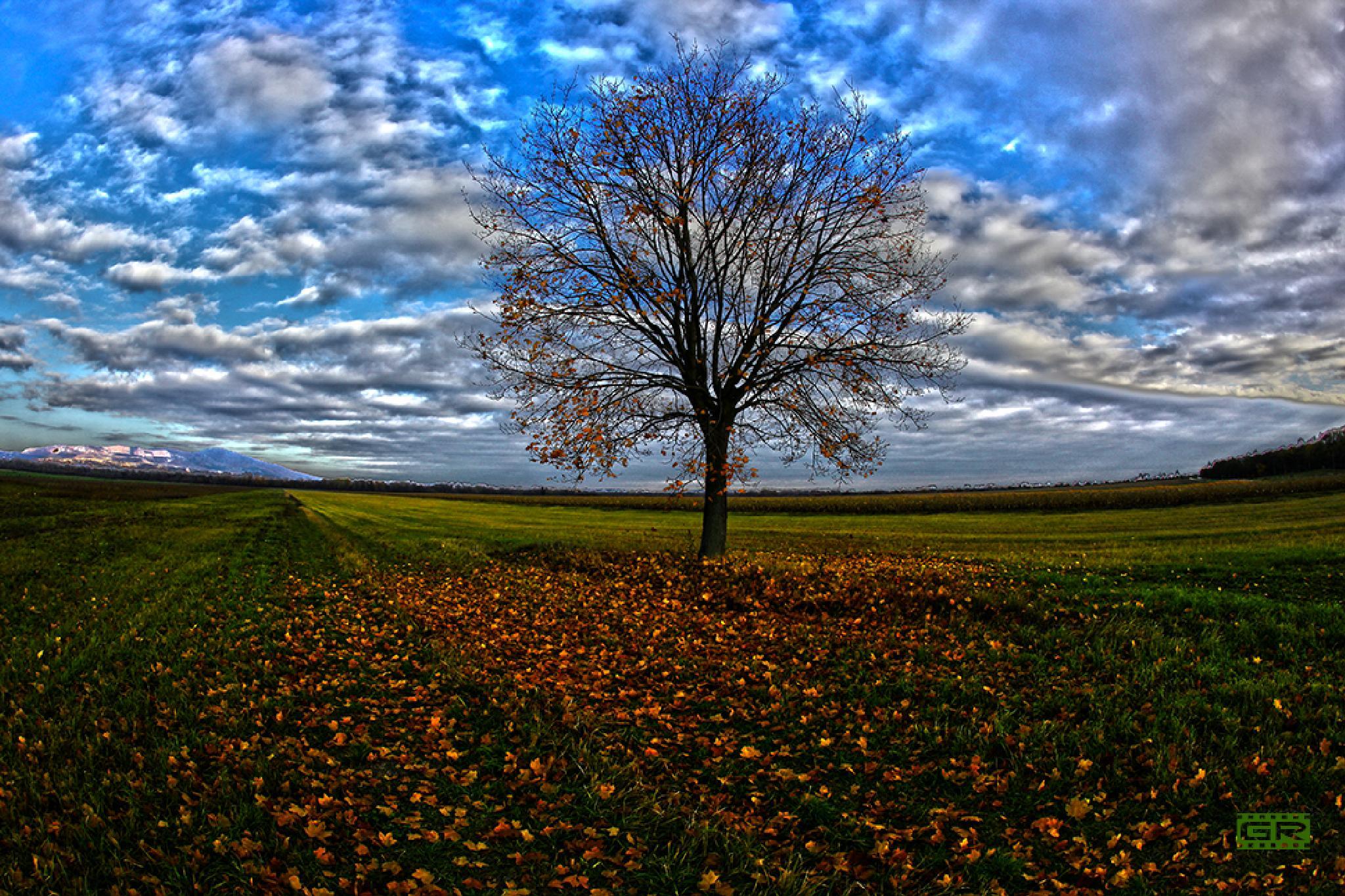 lonely tree 3 by Róbert Gecsényi
