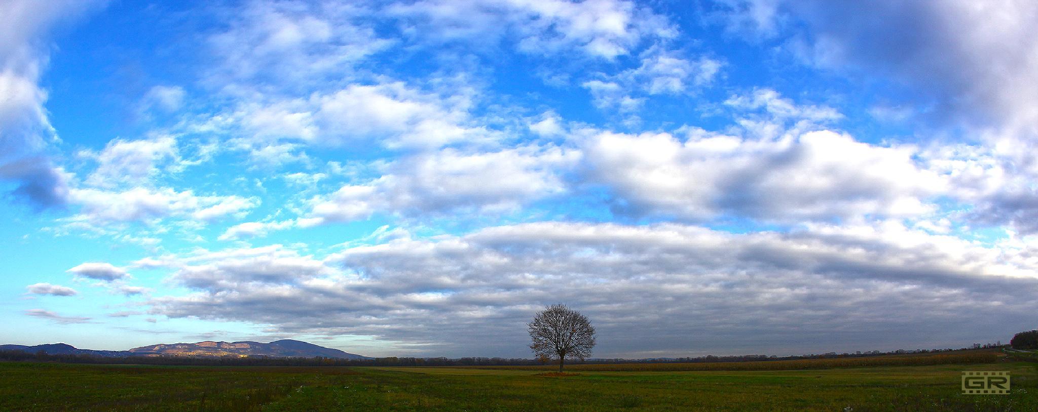 lonely tree by Róbert Gecsényi