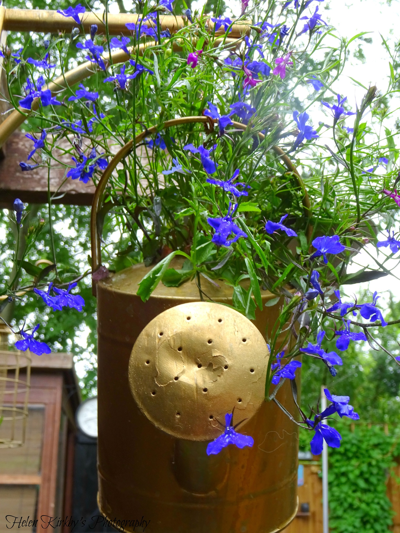 Watering can hanging planter with lobelia by HelenKir
