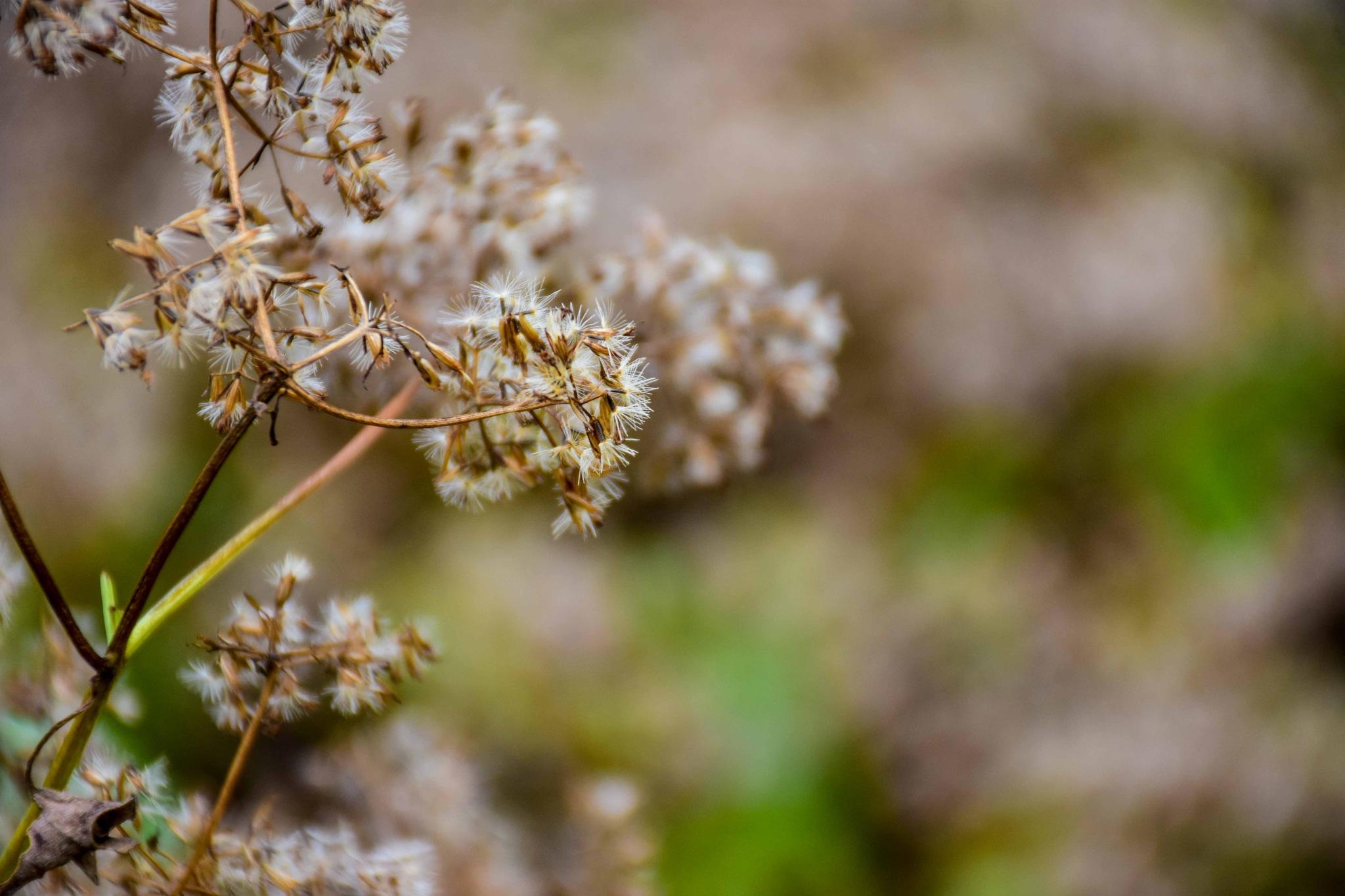 Grass by ayyashahamed1