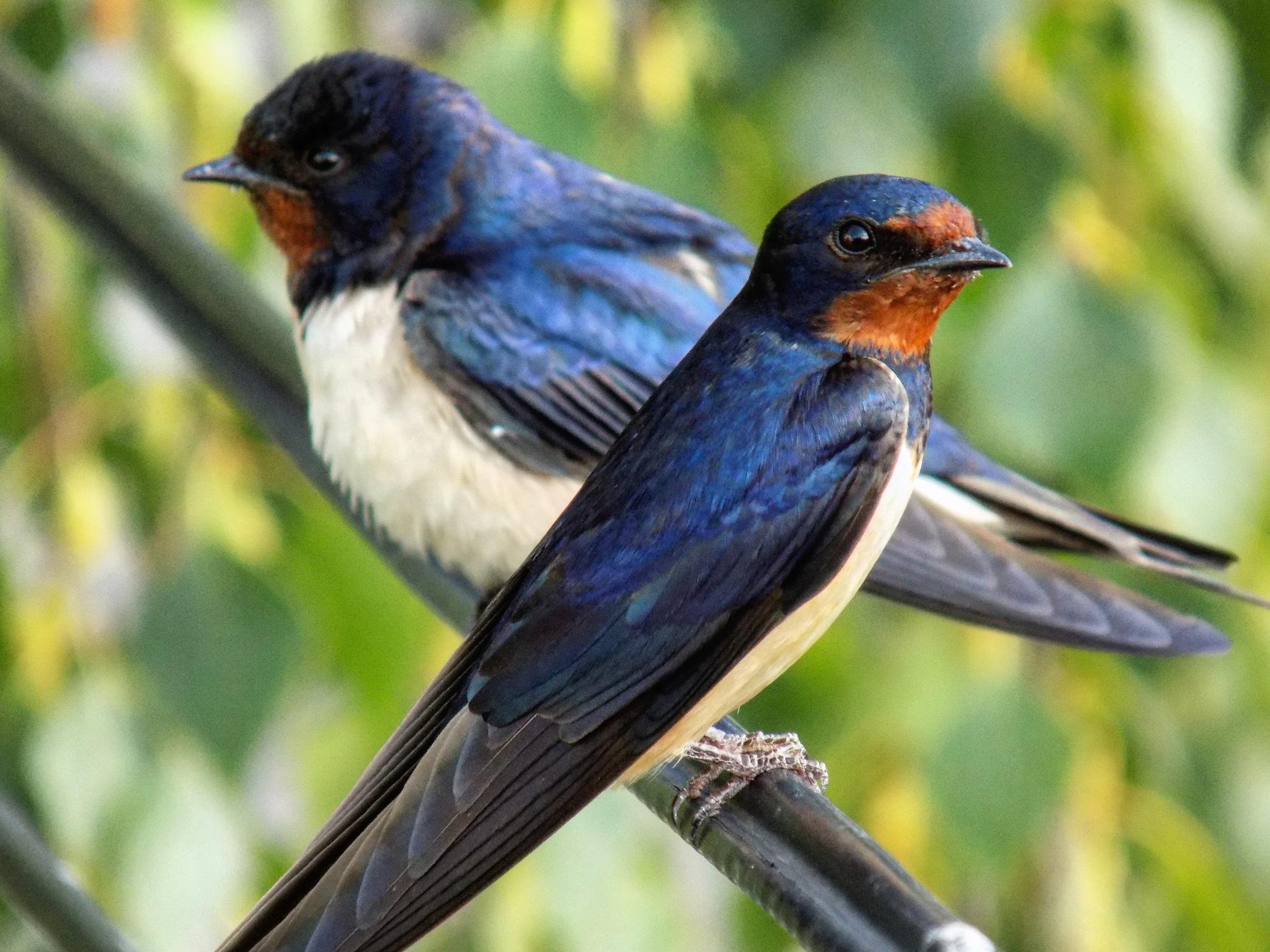 Birds by @darijaginger