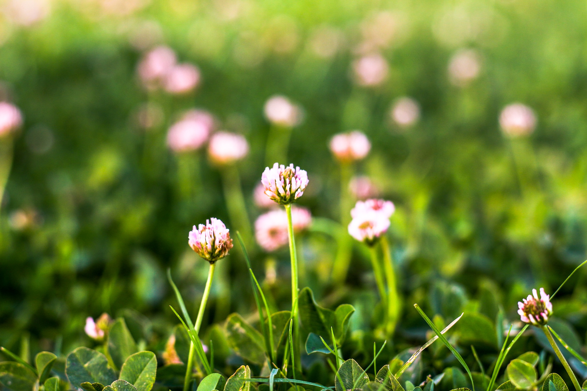 Photo in Nature #tiny flowers