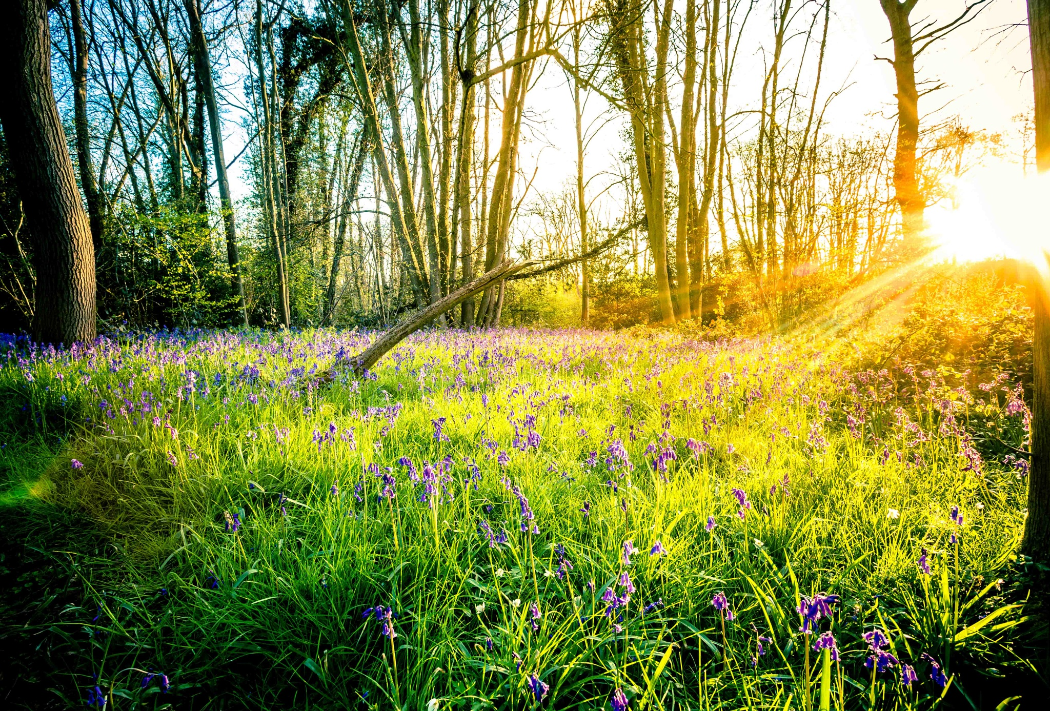 Spring sunrise and Blubells in my secret wood by John Burnett