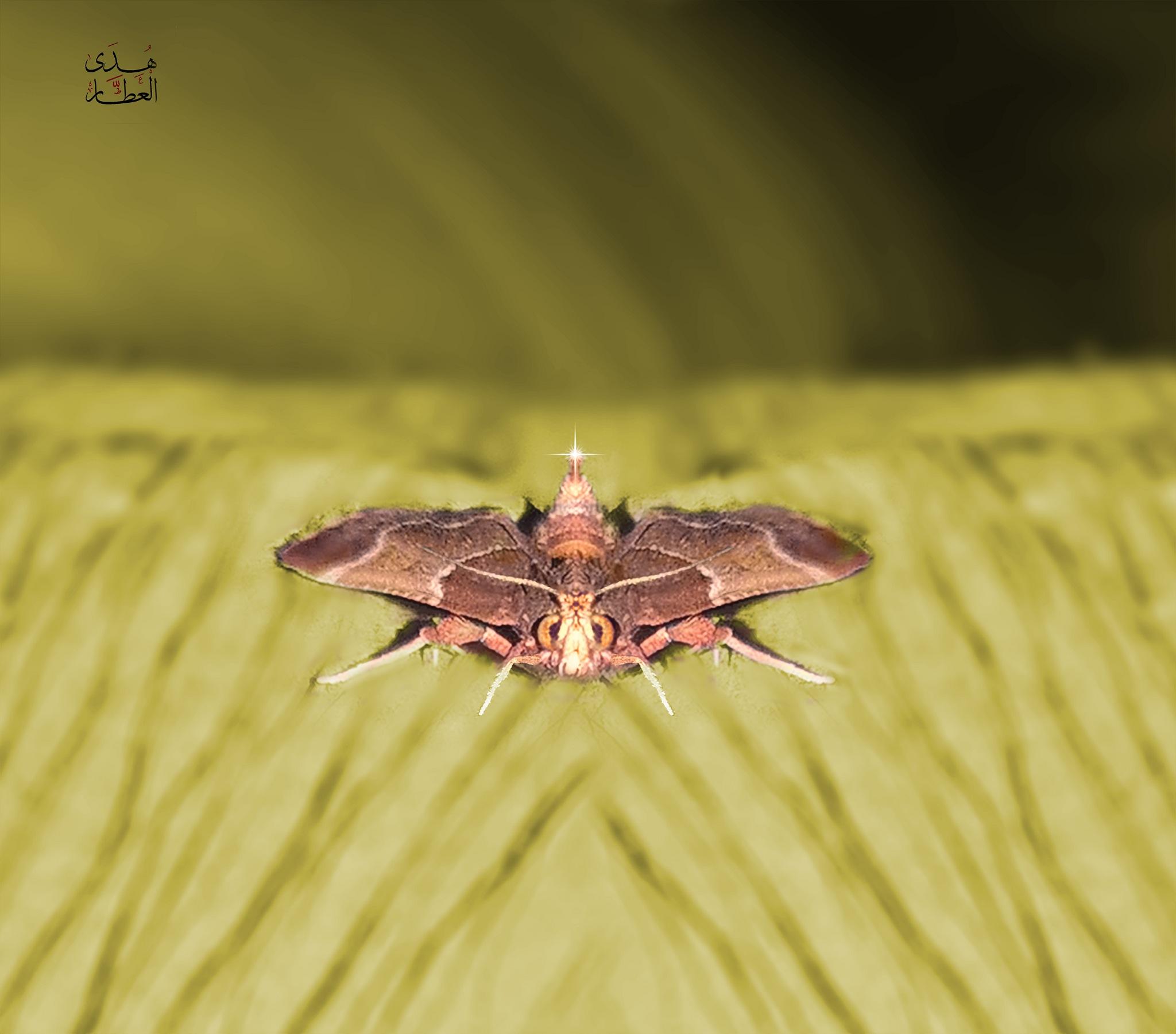 I captured it in my Room :) by Hoda Elattar