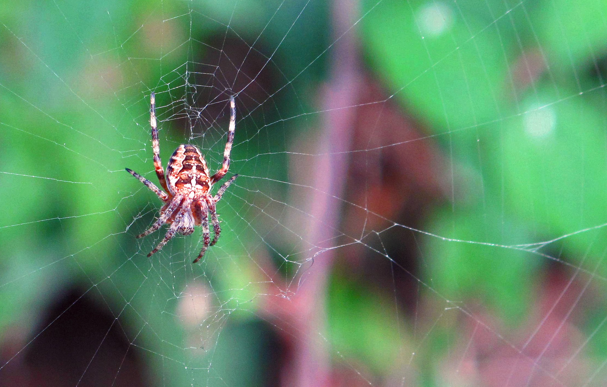Spider on the web. by jamez