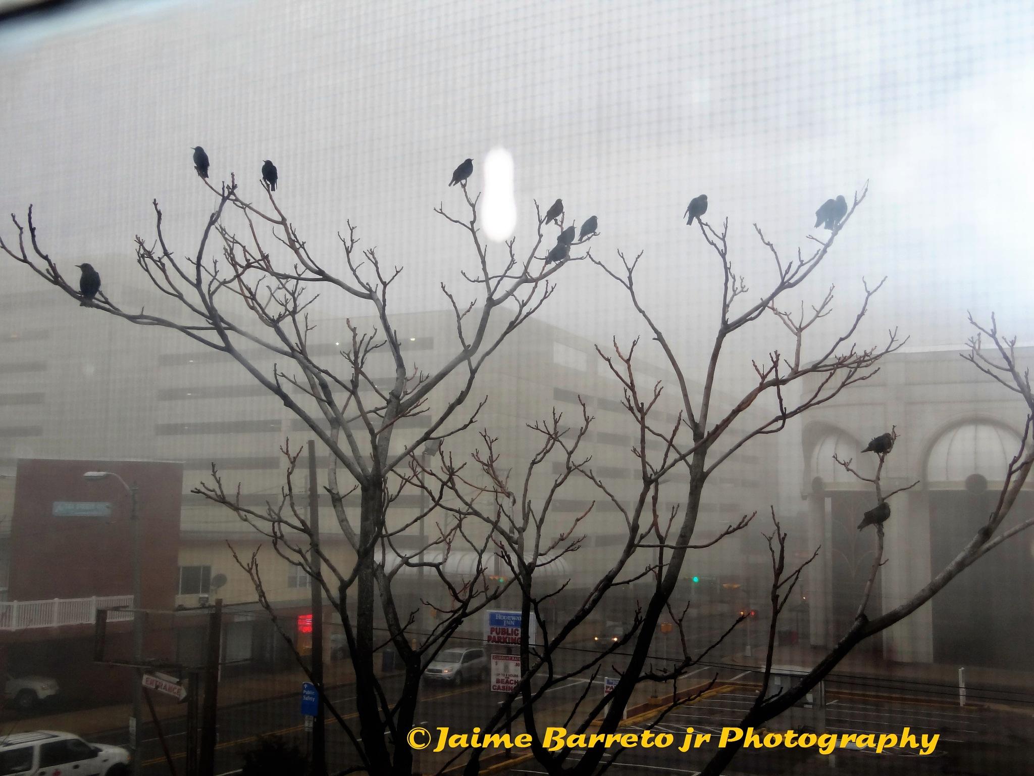 Blackbirds Meeting in AC  by Barreto Jr. Jaime