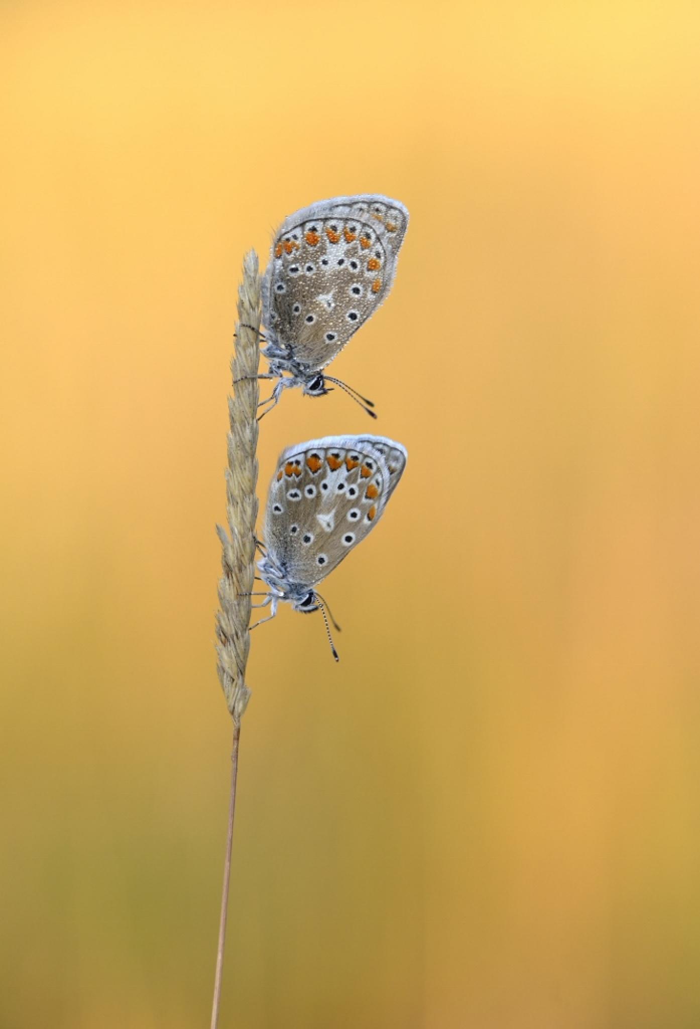 twinssss by Ruurd Visser