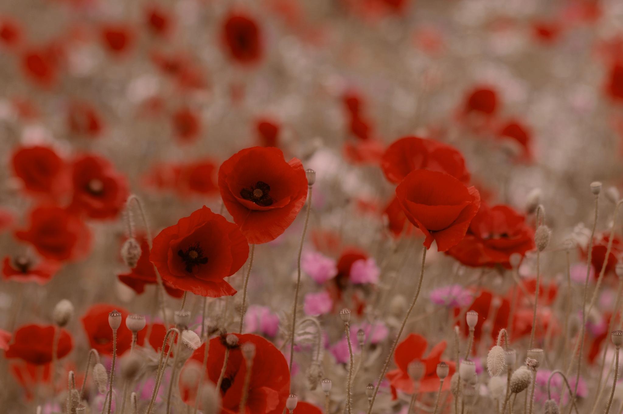 Rememberence Sunday by Mark Pemberton