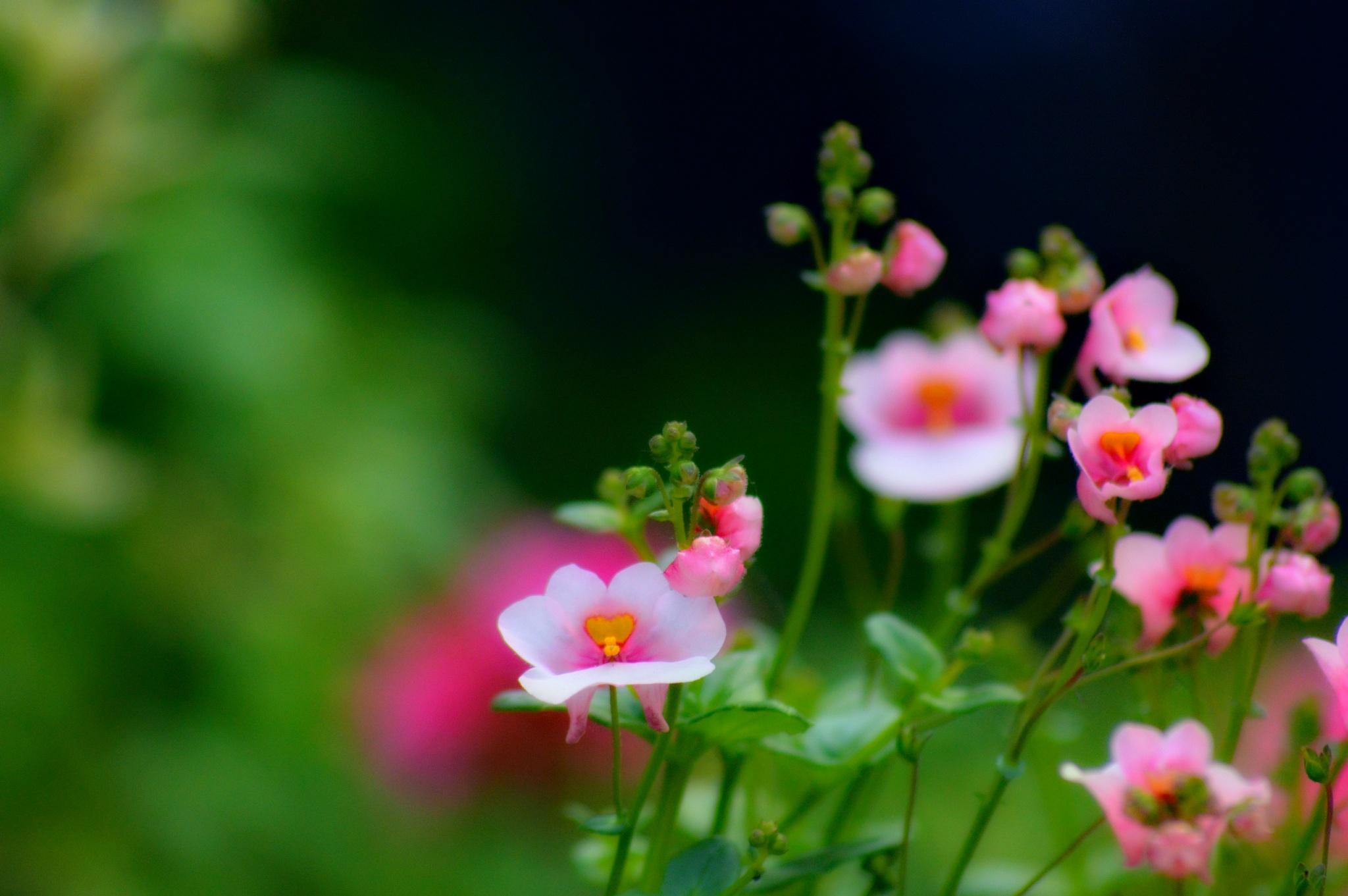 Springtime beauty by Mark Pemberton