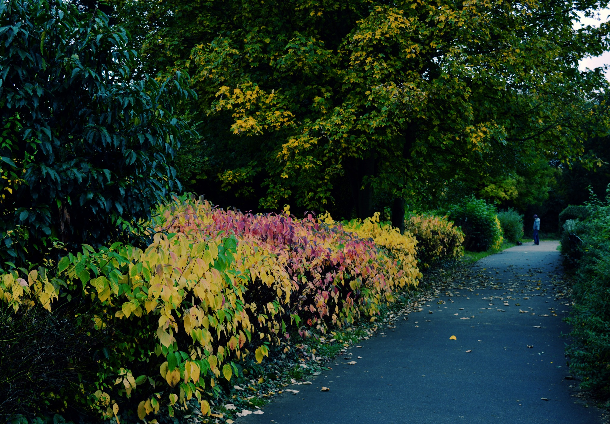 Autumn is Wonderful by Mark Pemberton