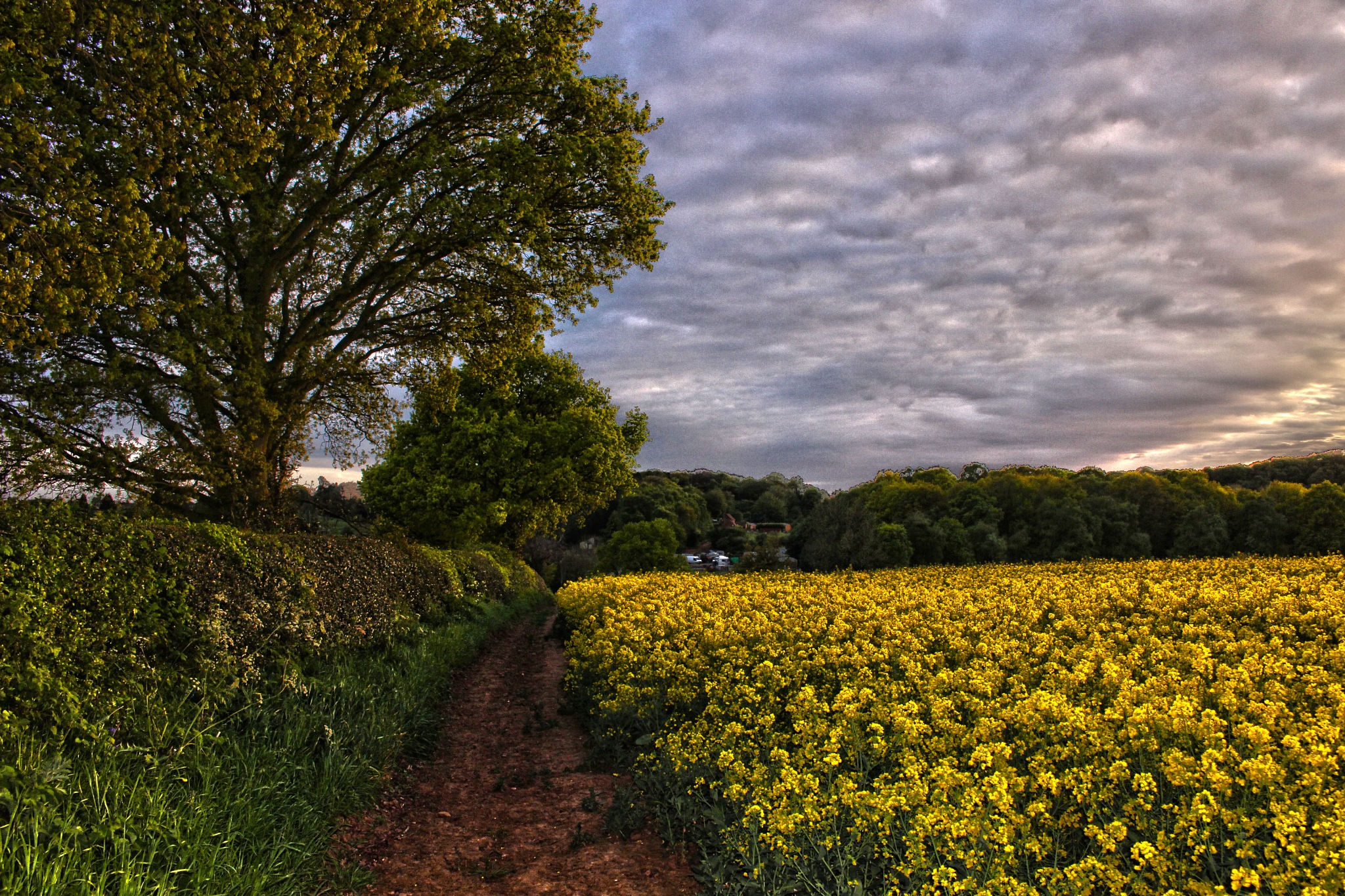 Following the scenic Path by Mark Pemberton