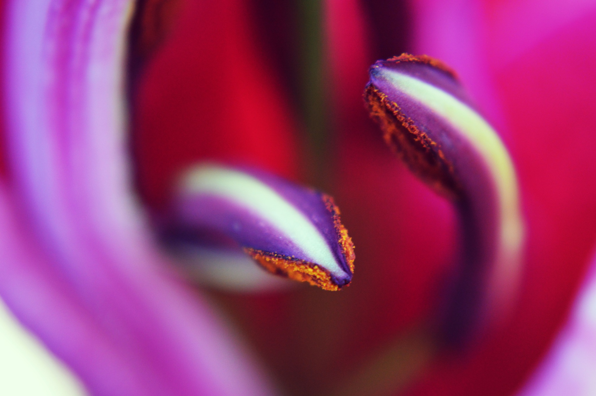Two Serpents in a Lily by Mark Pemberton
