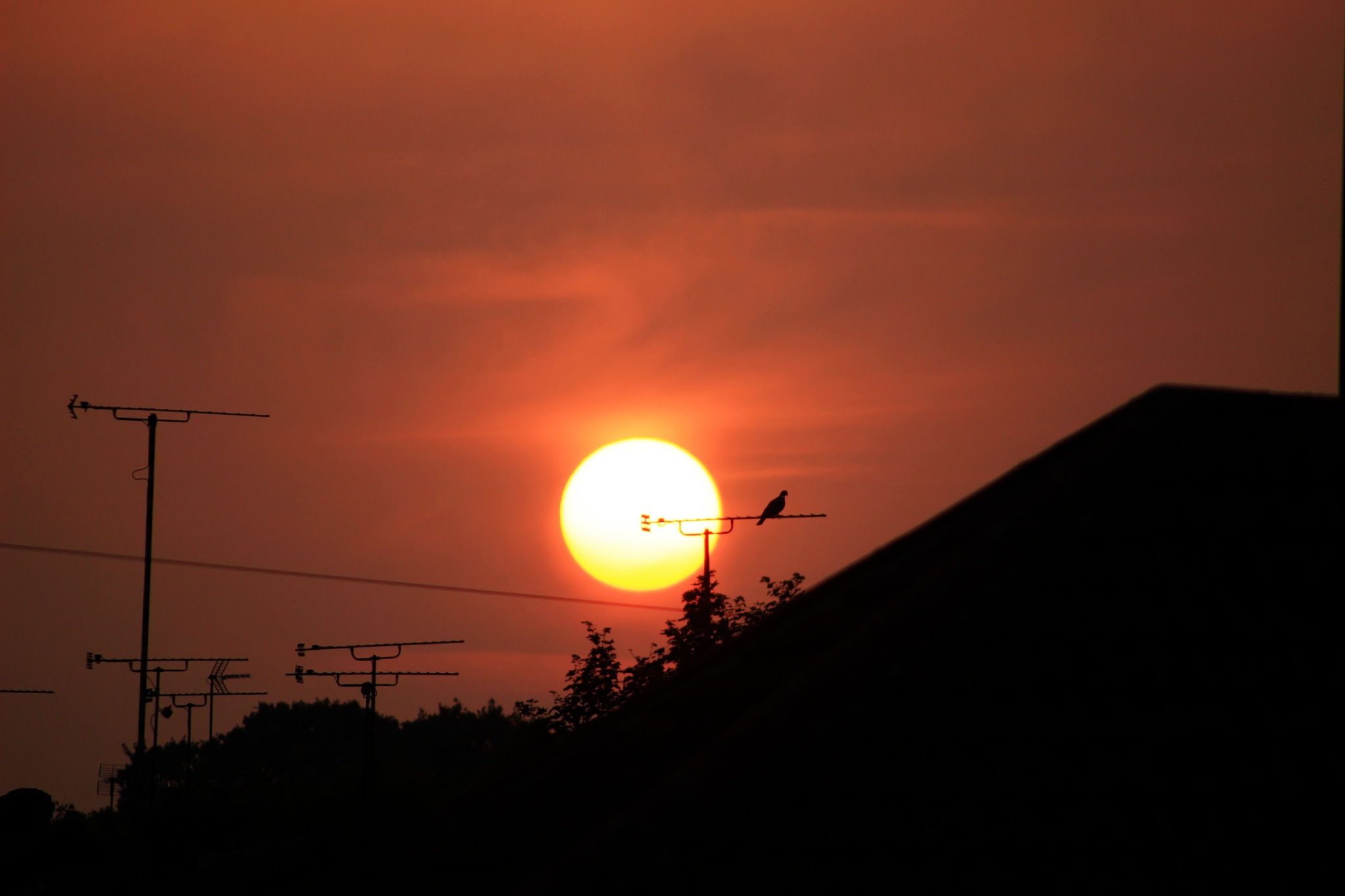 The Bird and the Burning Sun by Mark Pemberton