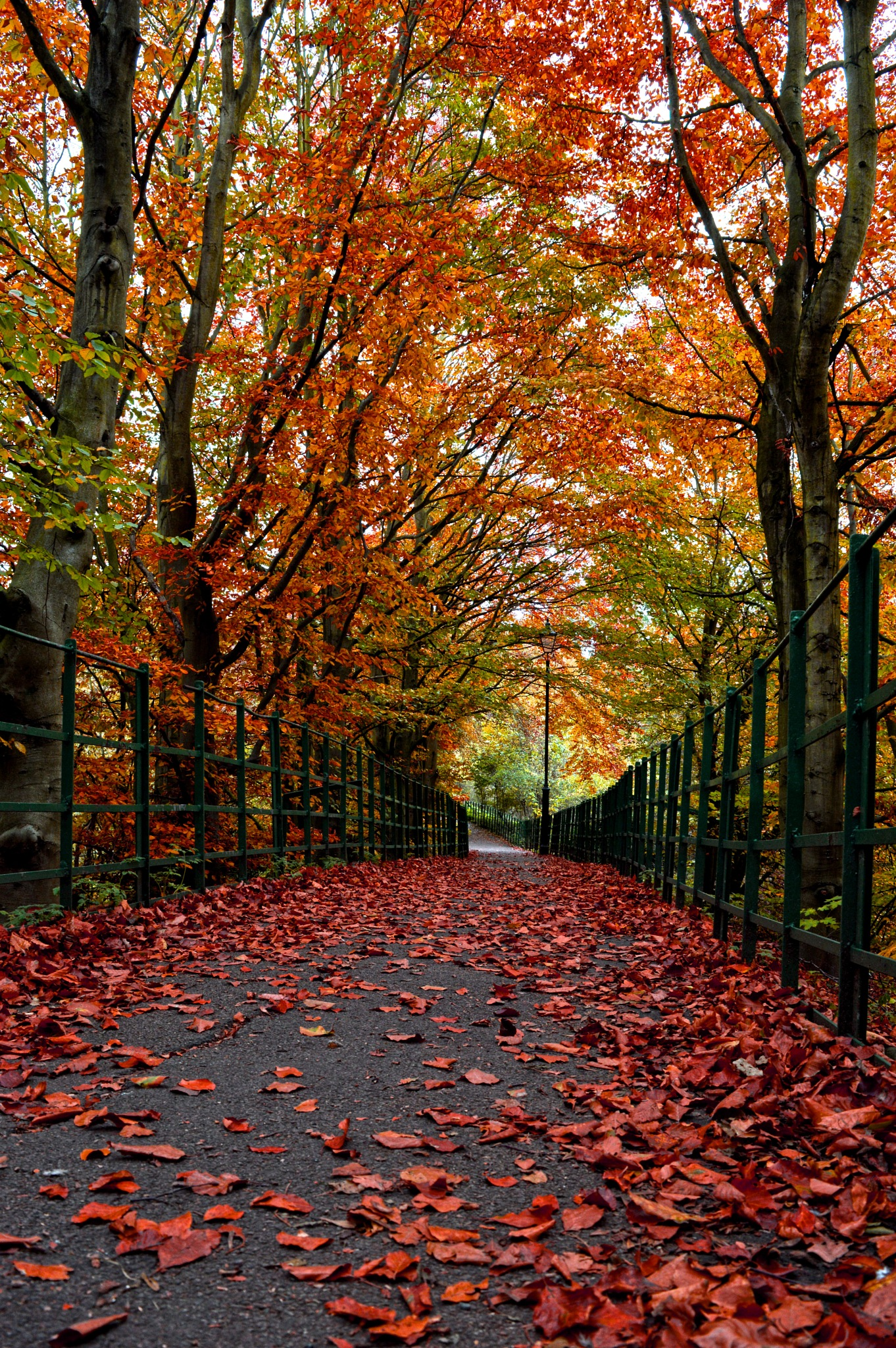 A Red Tinted Autumn by Mark Pemberton