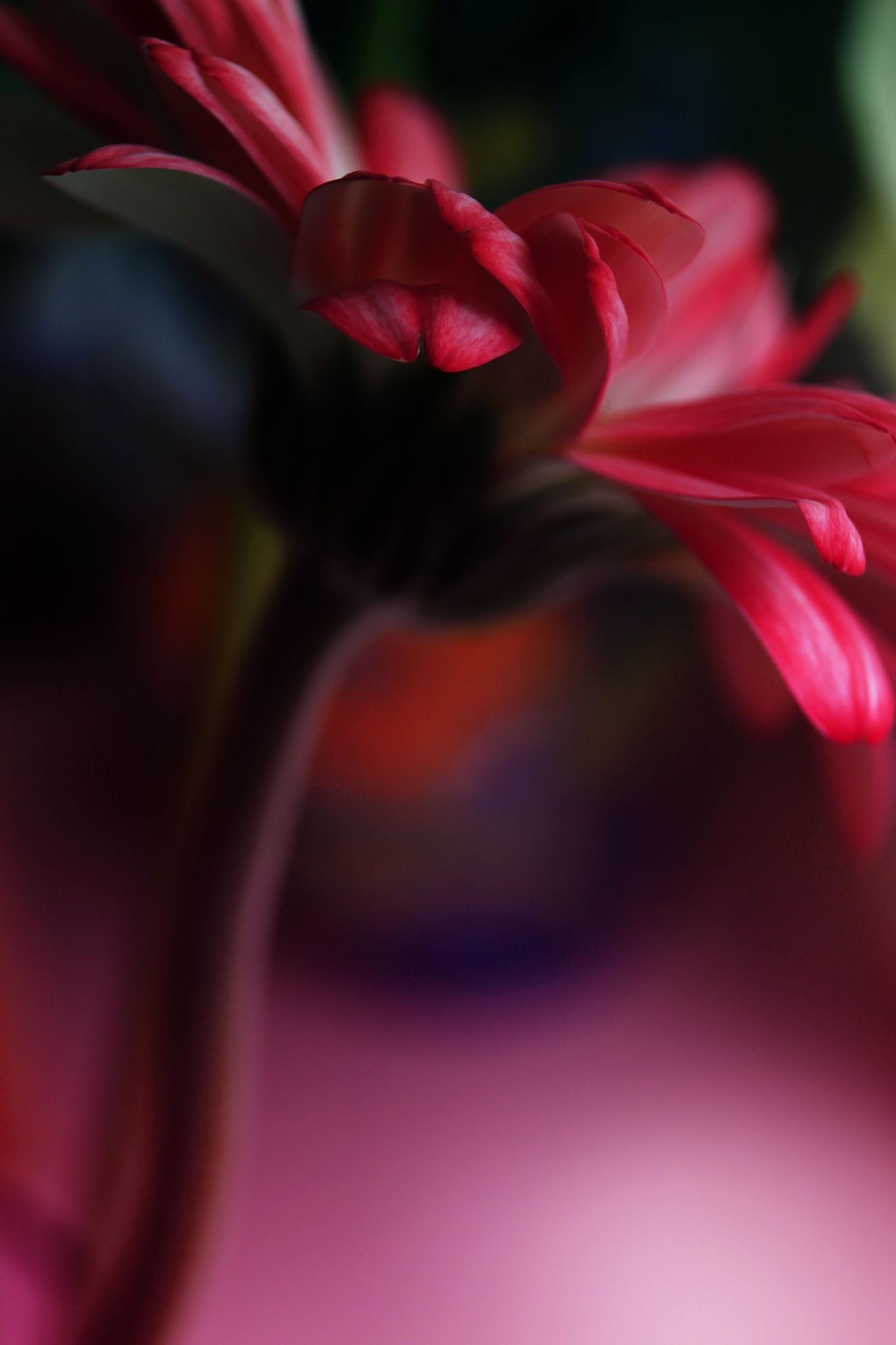 Vibrant Life by Mark Pemberton