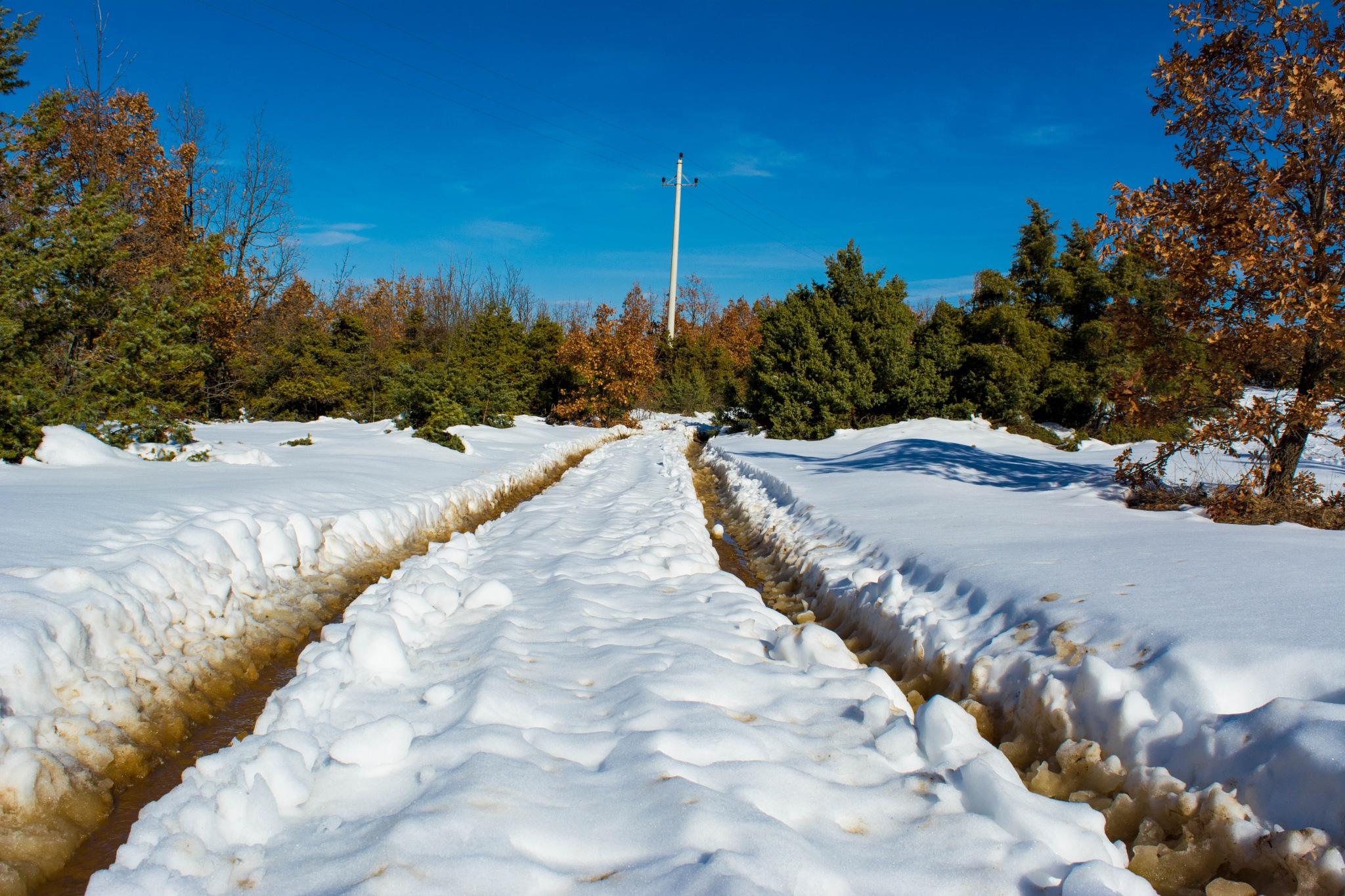 Winter or Autumn by Dimitar Dollar Stojkov