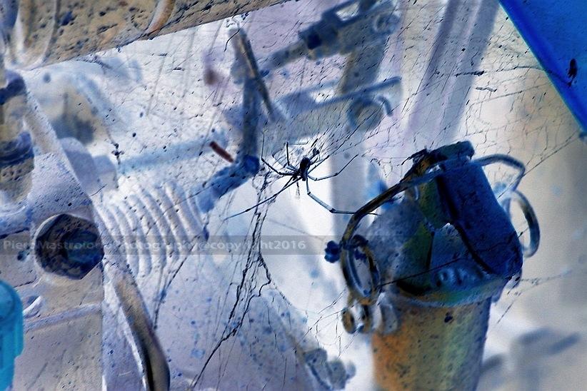 Spider by Piero69