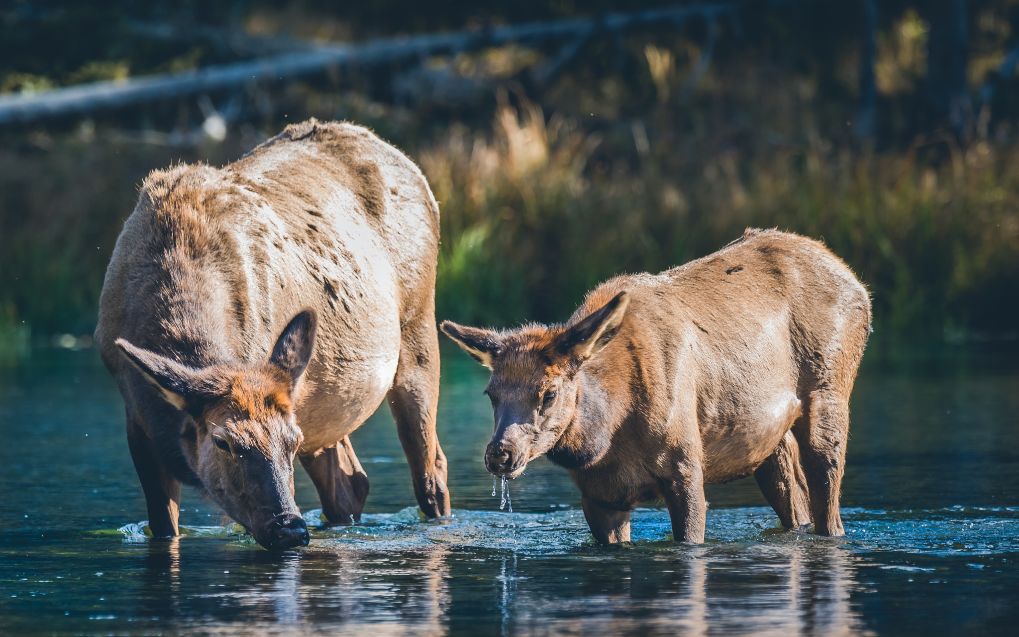 Cool Water by richardhorstphotography