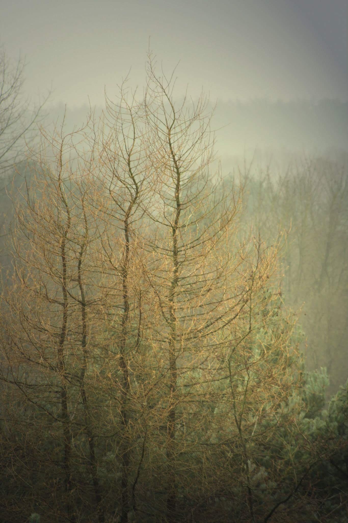 autumn  by Mark Lawton