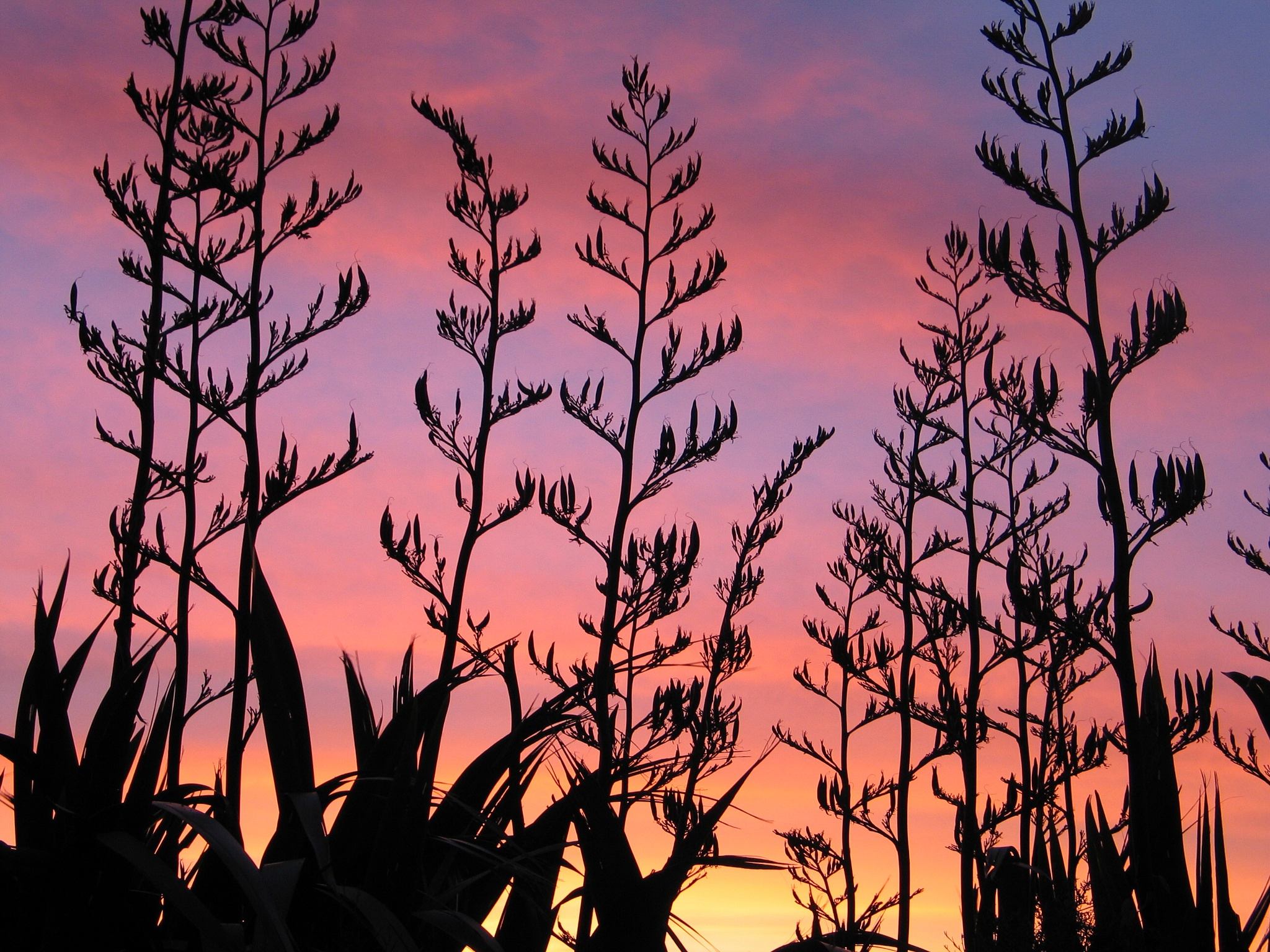 Flax Sunset by burhinus