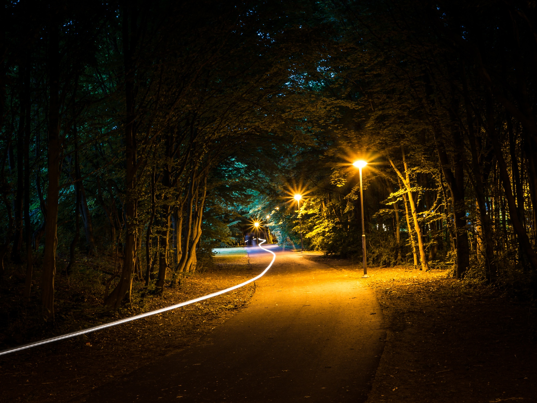 Photo in Street Photography #bike #biker #long #exposure #night #evening #yellow #lights #trees #road