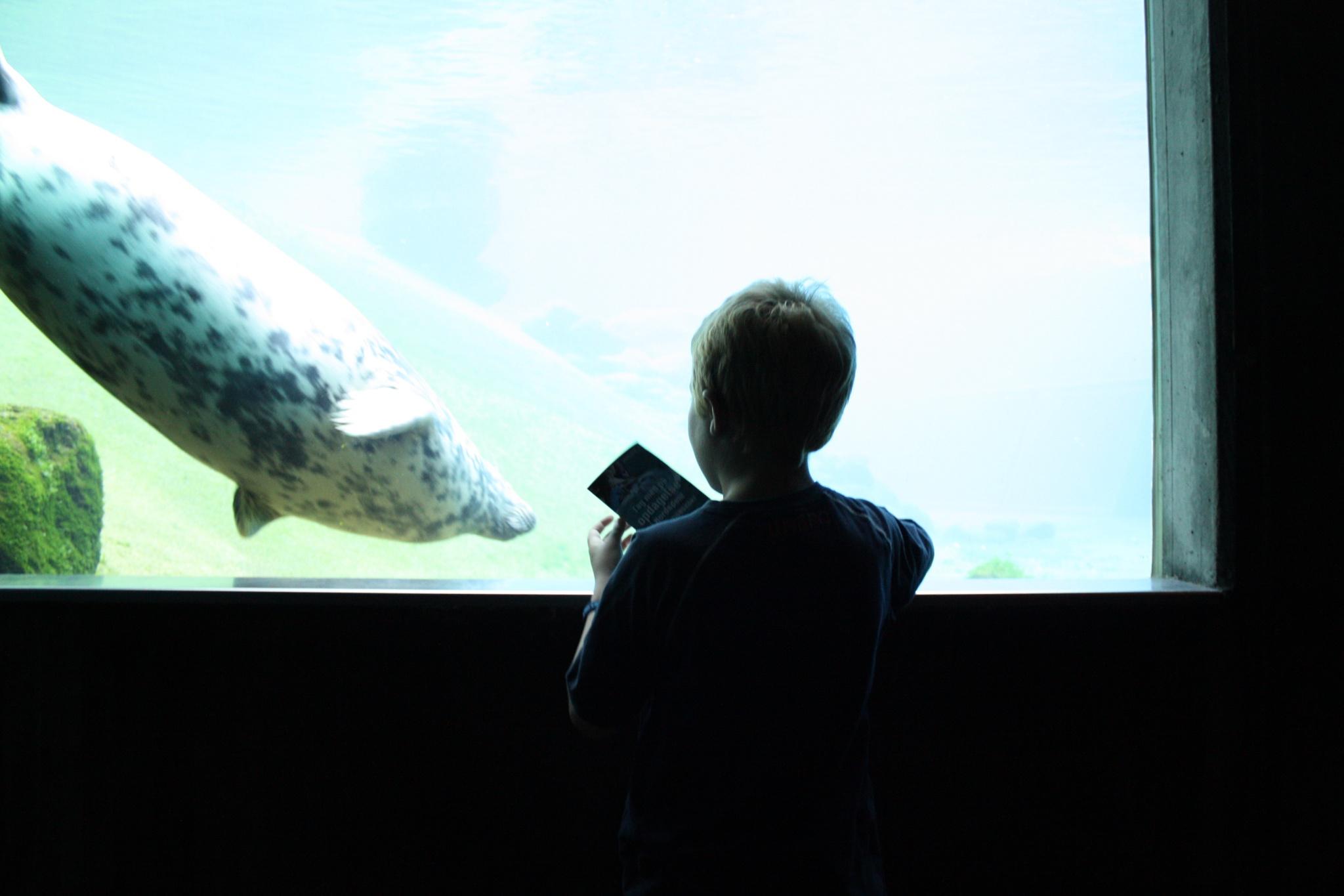 Boy and sealion by Espen Øien