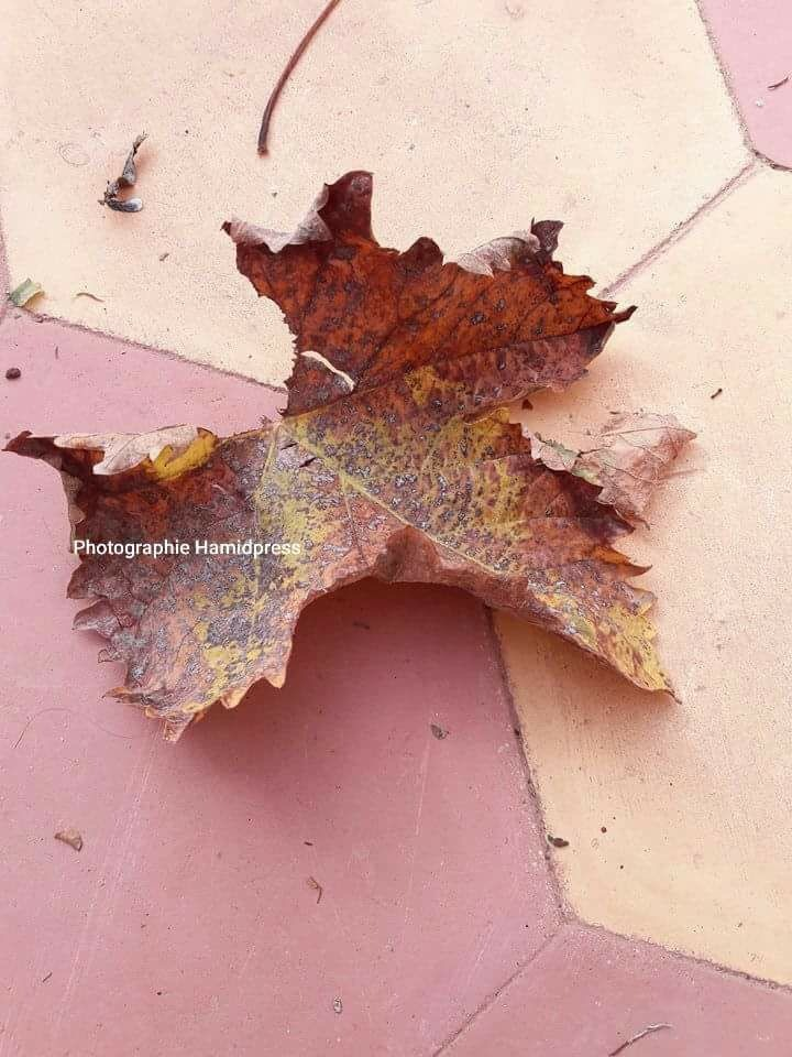 C'est l'automne  by Abdelhamid Hadouch