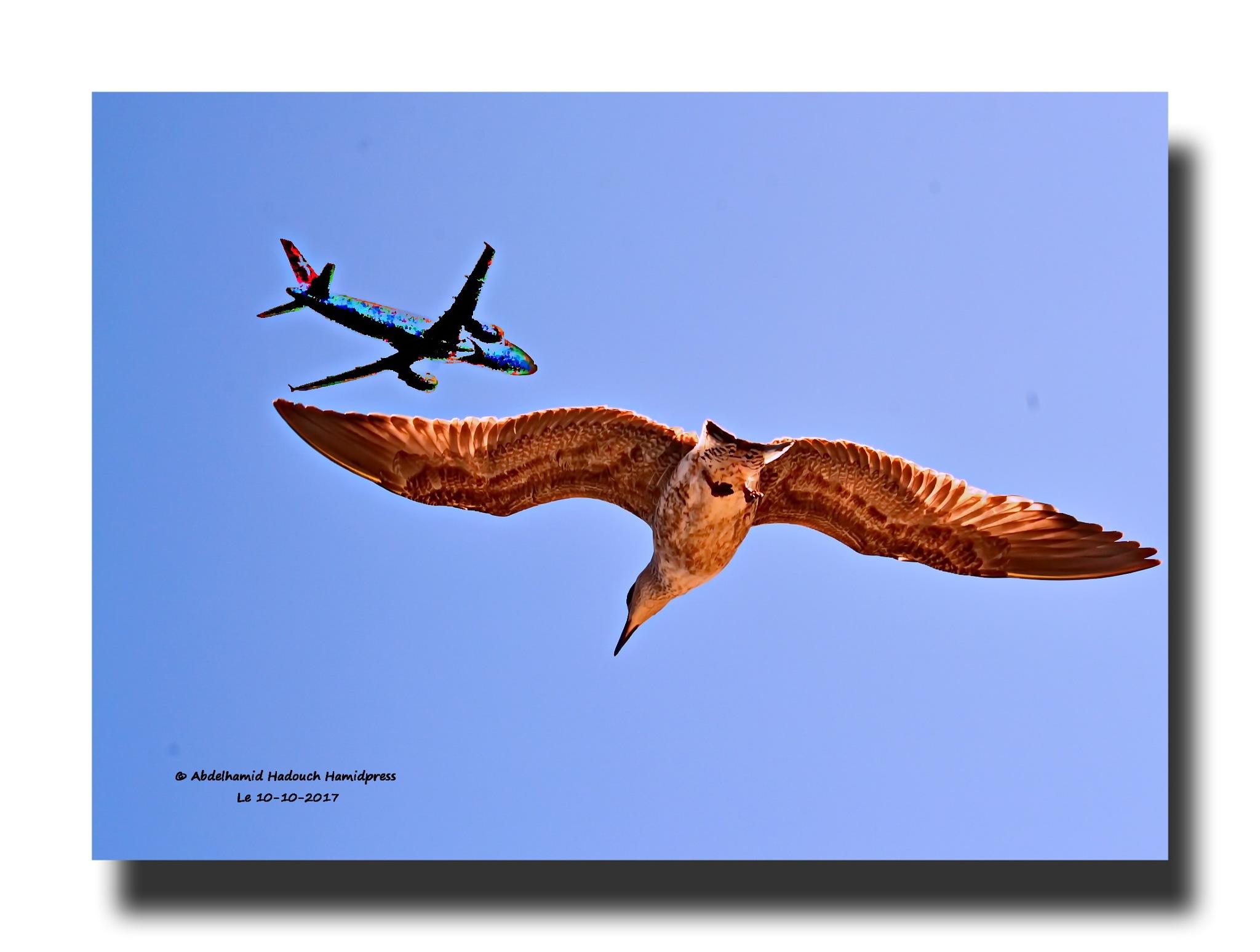 Mouette et Avion  by Abdelhamid Hadouch