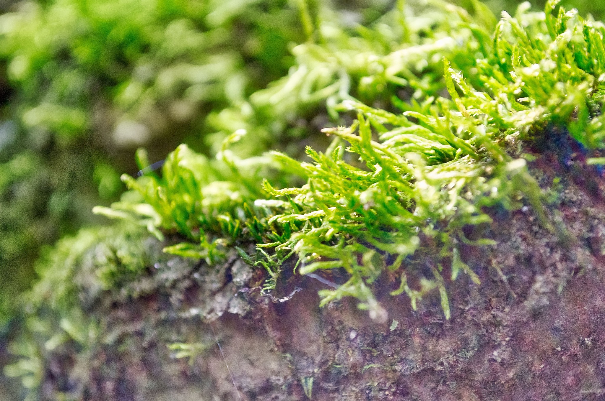 moss by mbrandtphotography