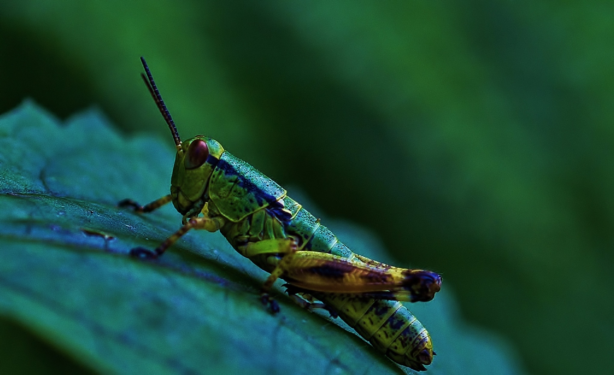 cricket by Paolo Calò photography