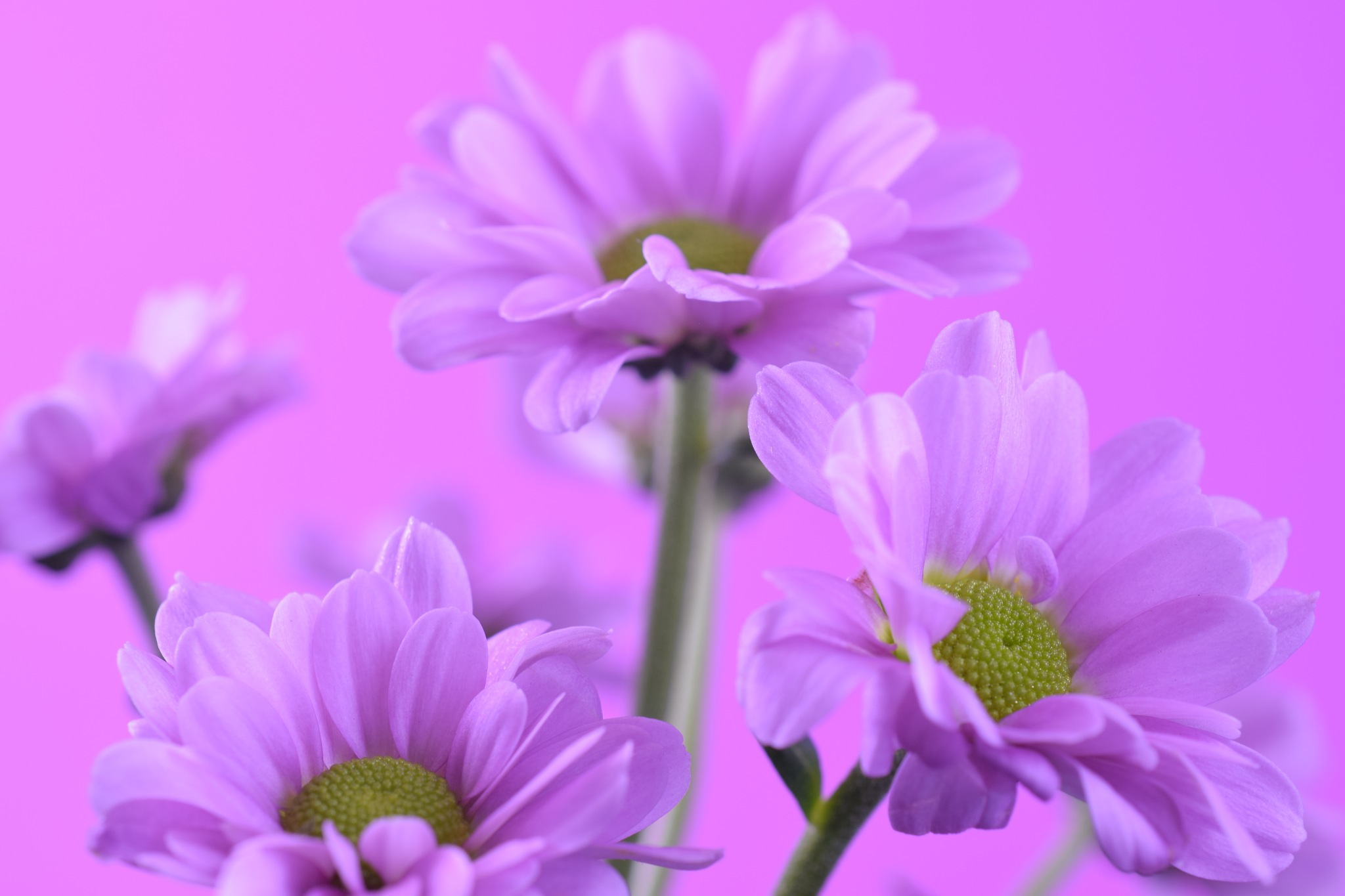 Pink flower power by Theresia Buskas