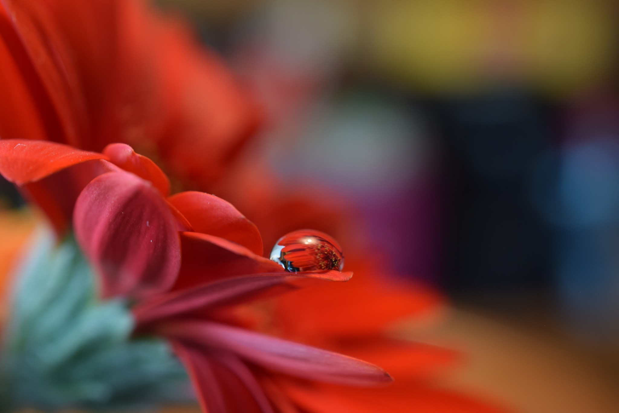 one drope on red flower by Theresia Buskas