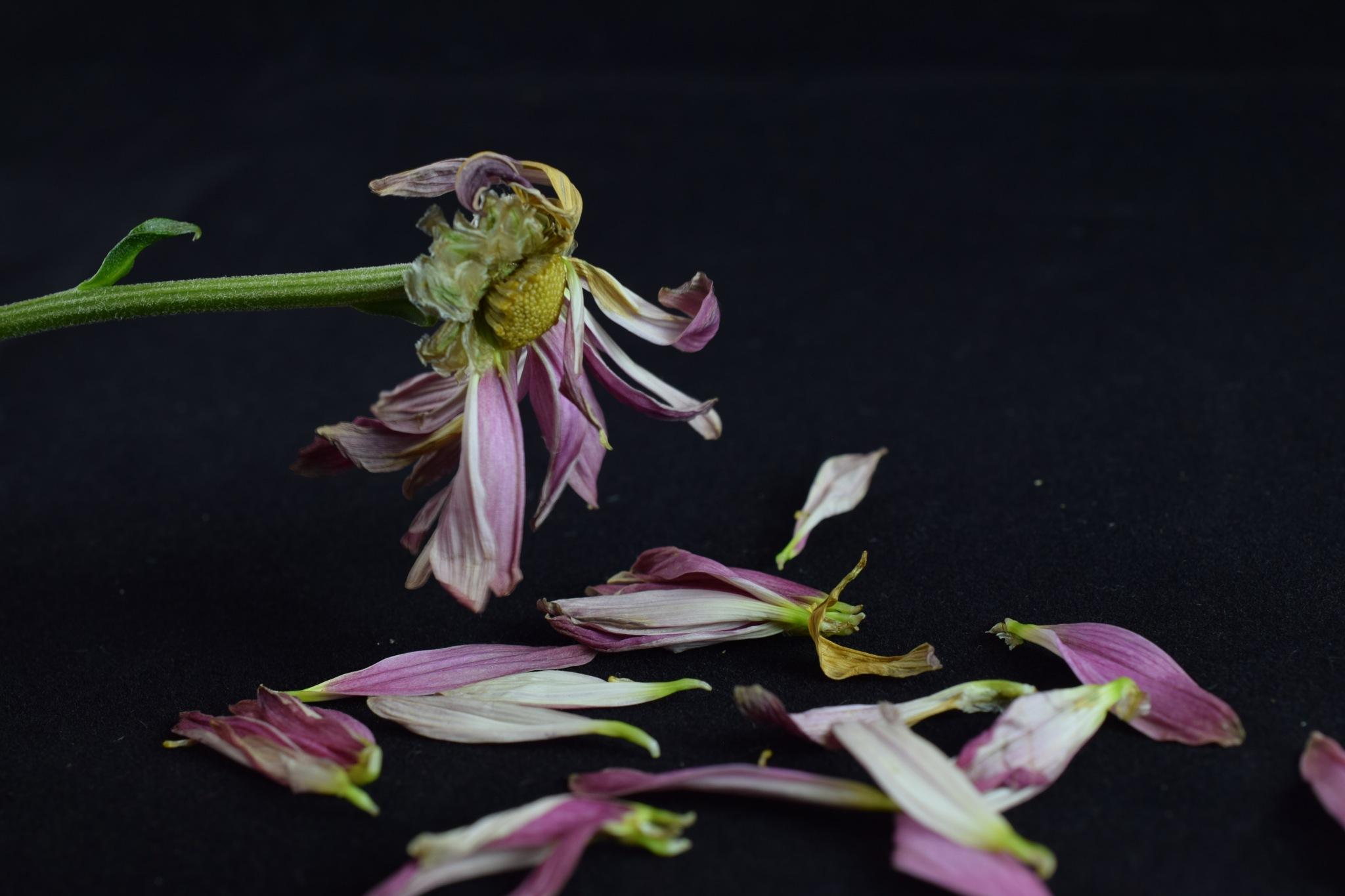Fallen flower IVII by Theresia Buskas