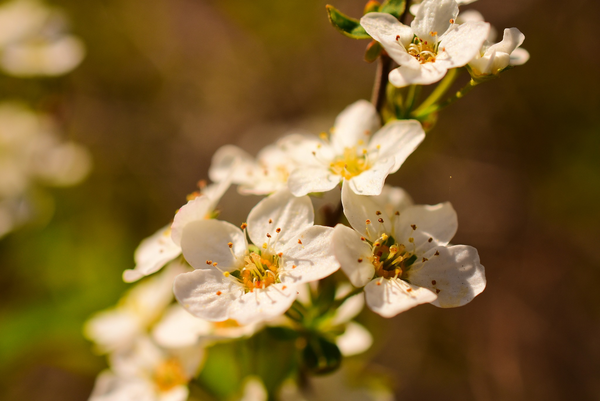 white flowers on a tree by Theresia Buskas