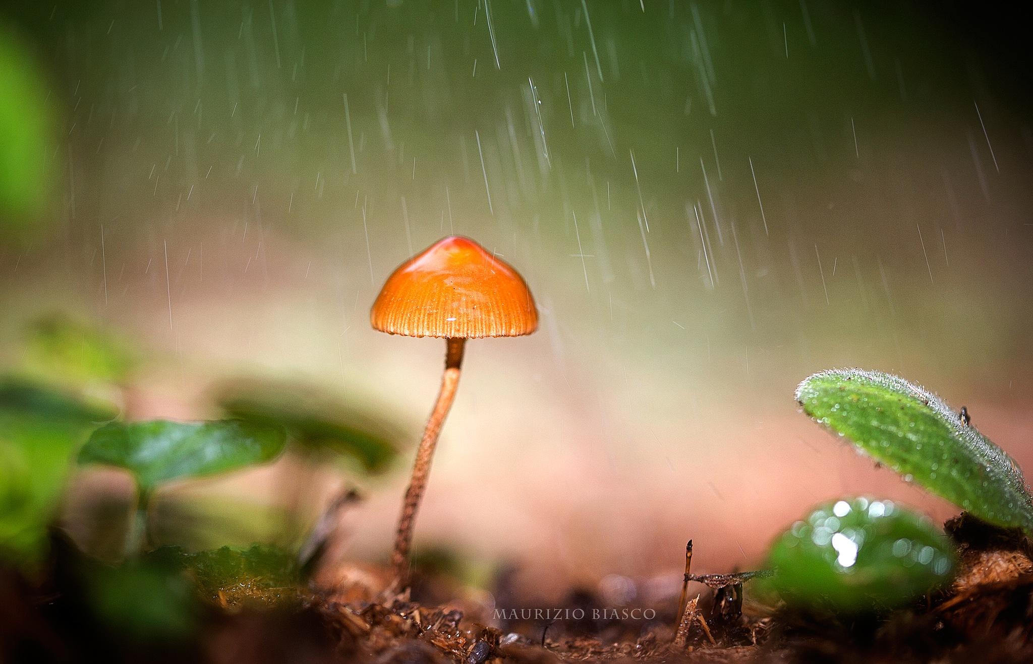 RAIN by mauriziobiasco