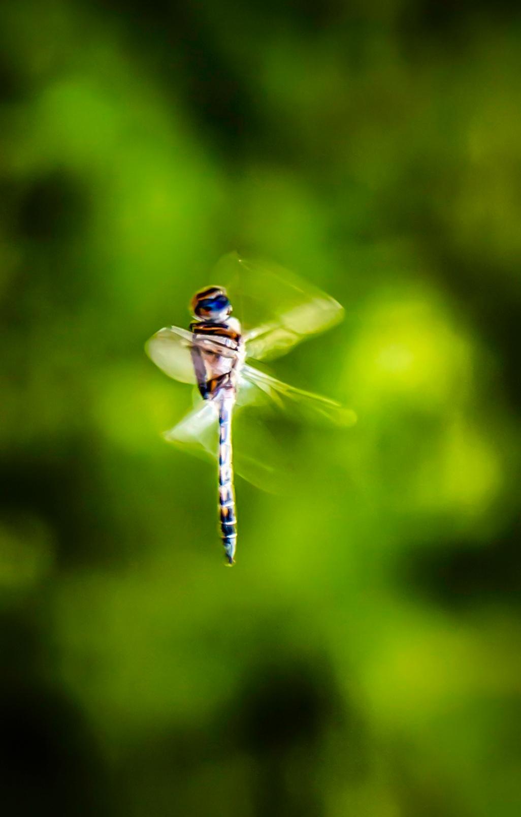 Dancing D Fly by RwBesler