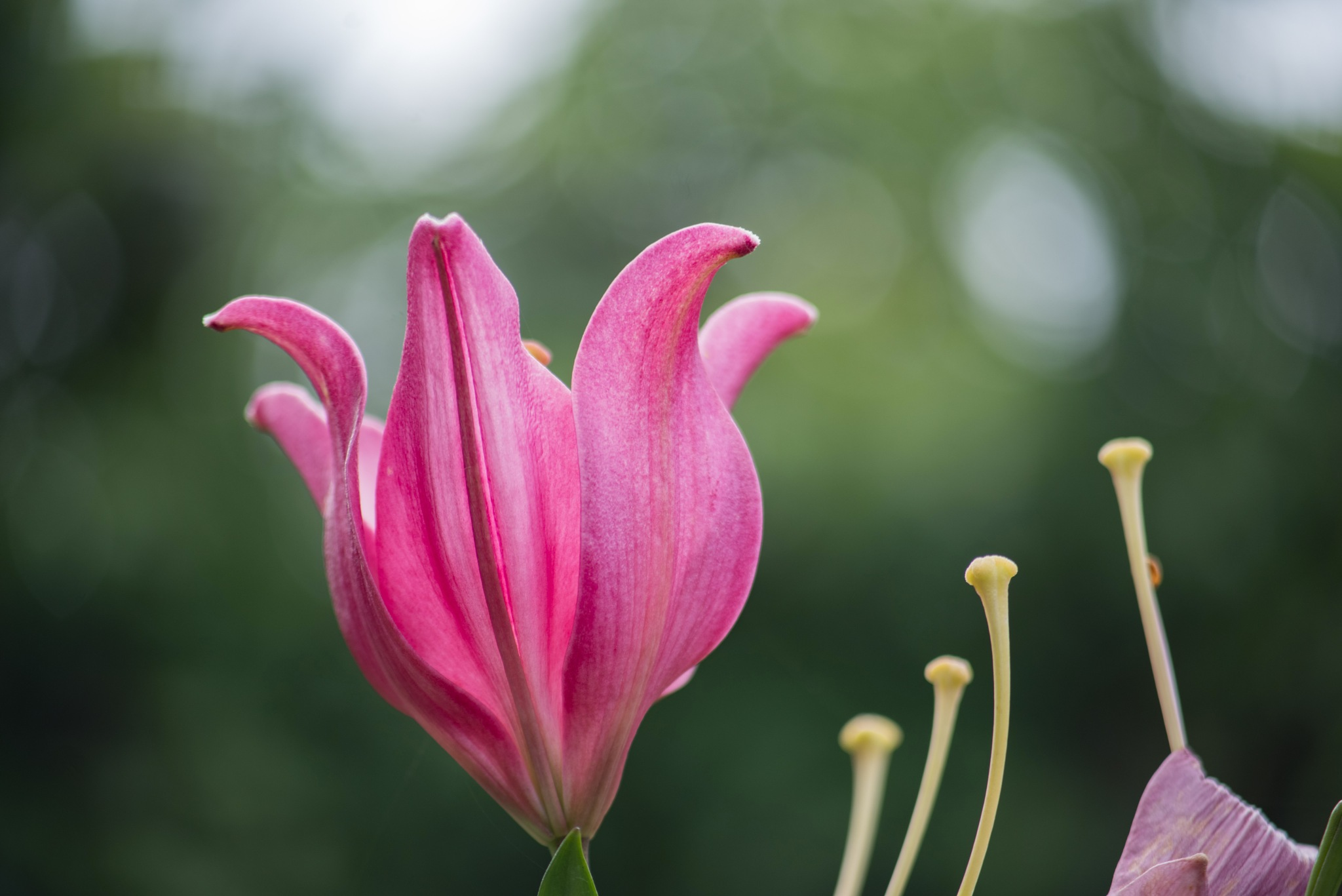 Flowers by Daniele Vecchi